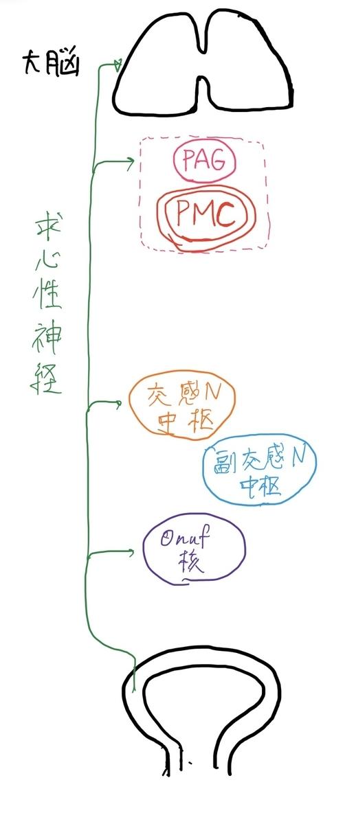 f:id:mi-wanko:20200503002512j:plain