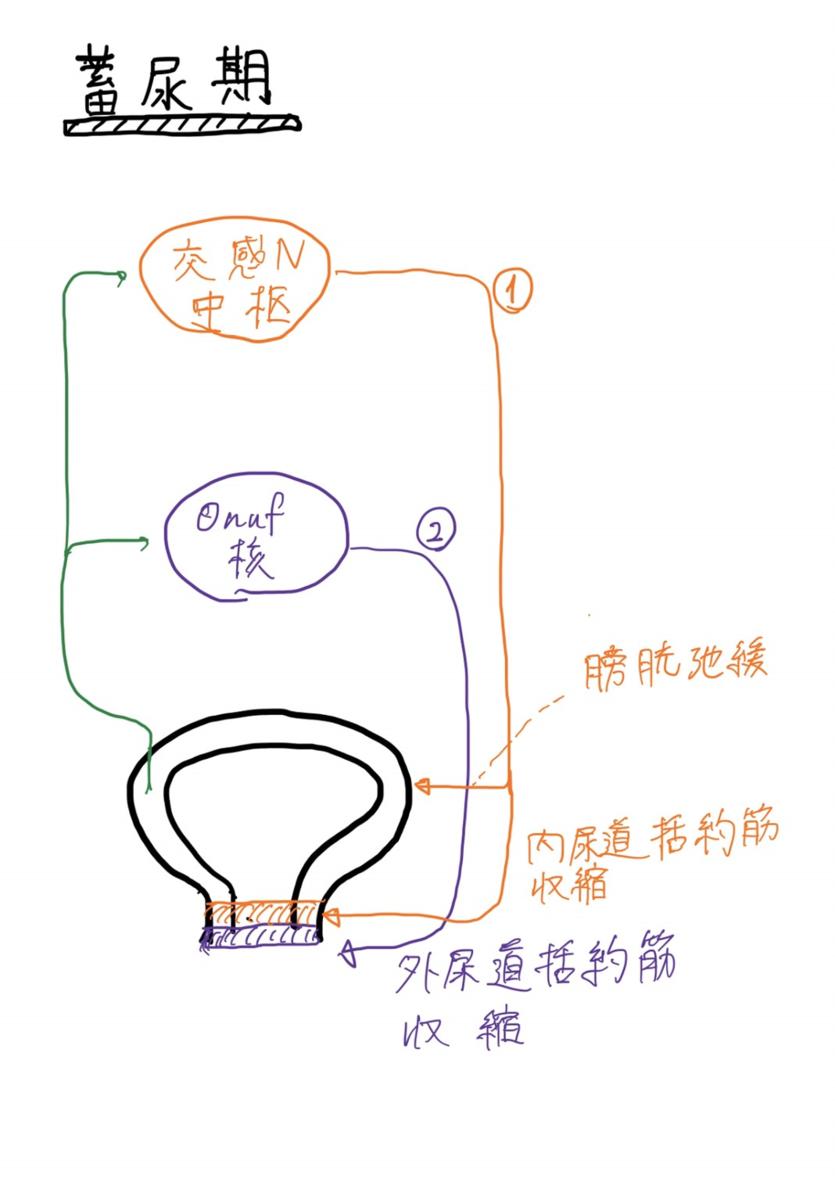 f:id:mi-wanko:20200503003800p:plain