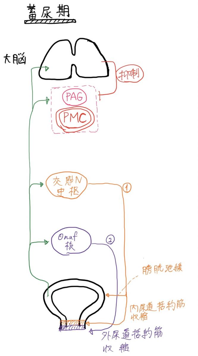 f:id:mi-wanko:20200503004837p:plain
