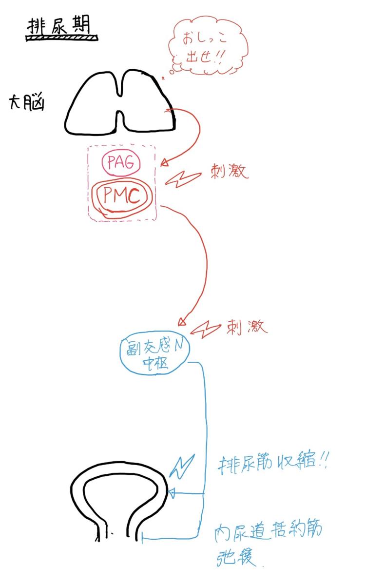 f:id:mi-wanko:20200503005706p:plain