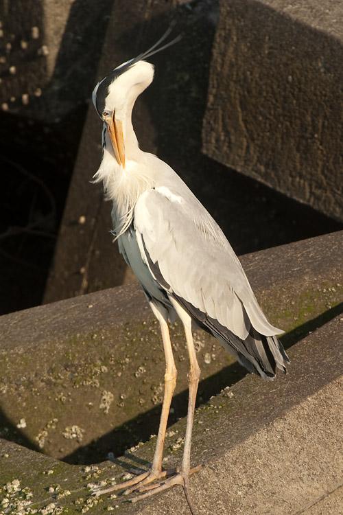 [Bird]