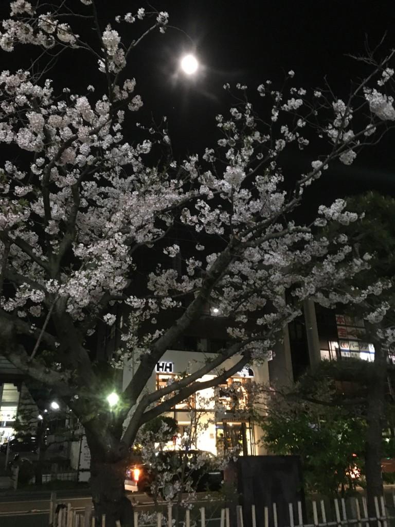 f:id:mia-nohara:20170410214125j:plain