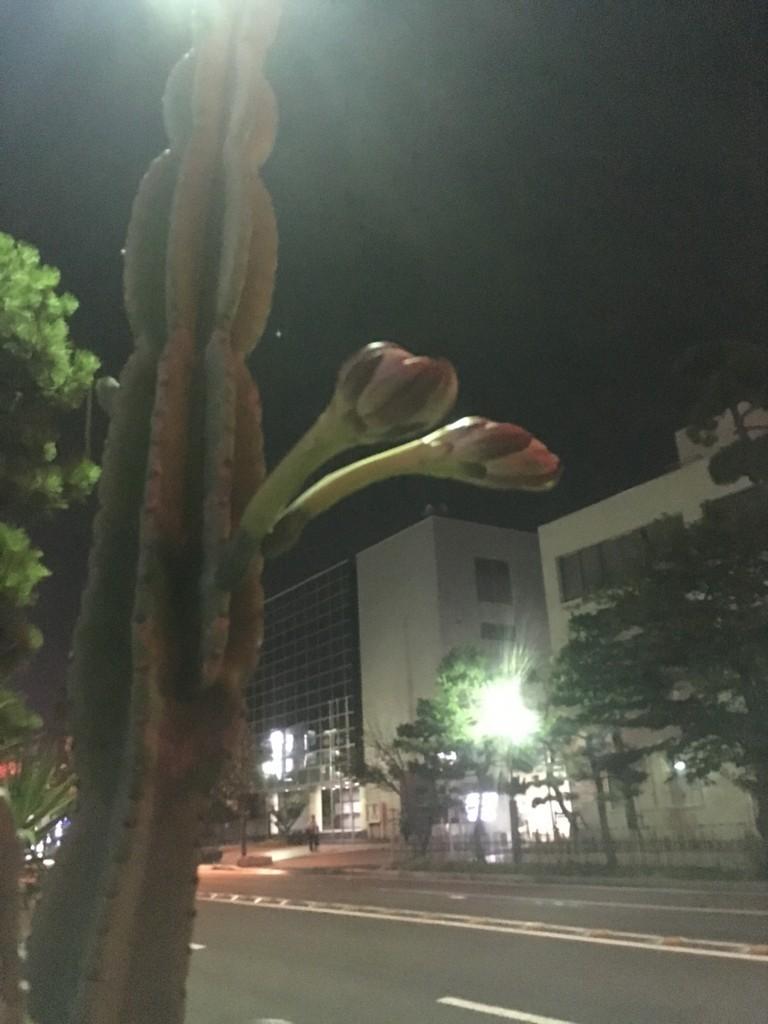 f:id:mia-nohara:20180805214451j:plain