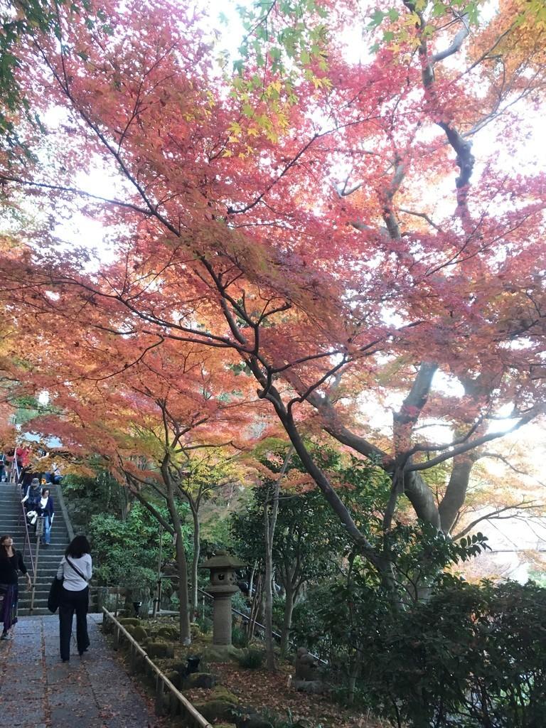 f:id:mia-nohara:20181204154752j:plain