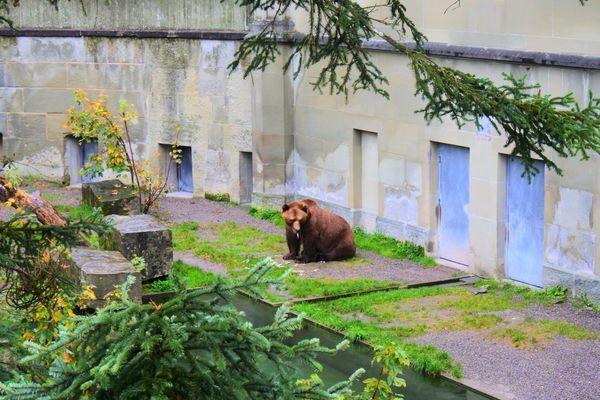 ベルンにあるべーレングラーベンの熊
