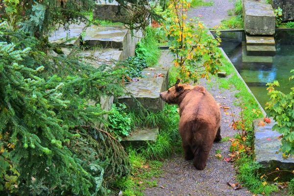 べーレングラーベンの熊