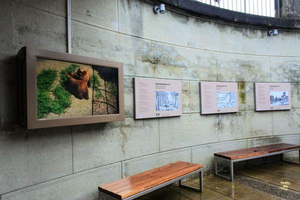 熊とベルンの歴史が展示されている