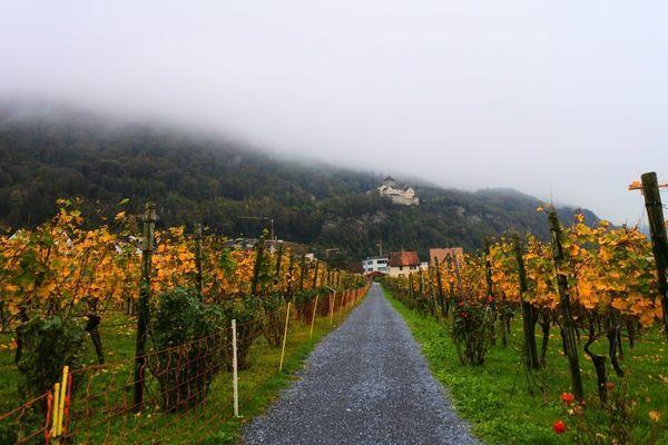 リヒテンシュタインのワイナリー付近にあるブドウ畑