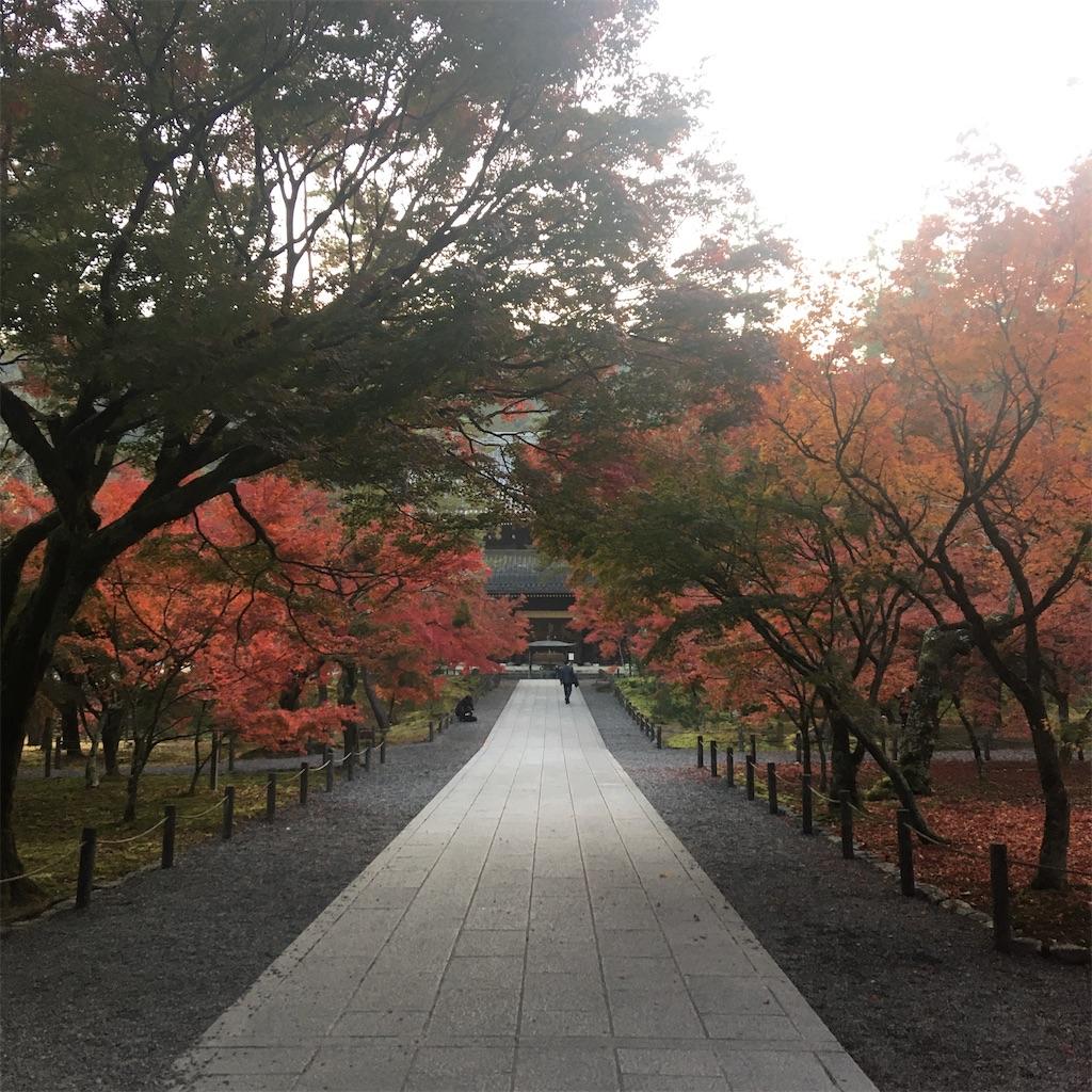 f:id:mica_ueda:20201118120141j:image
