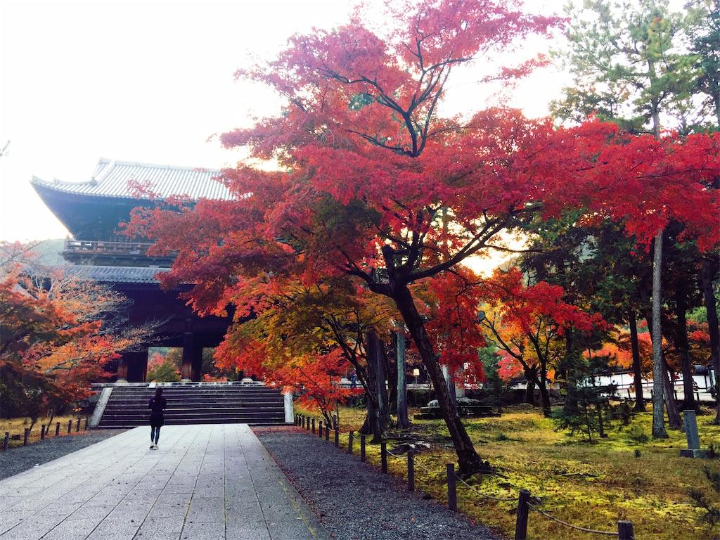 f:id:mica_ueda:20201118120146j:image
