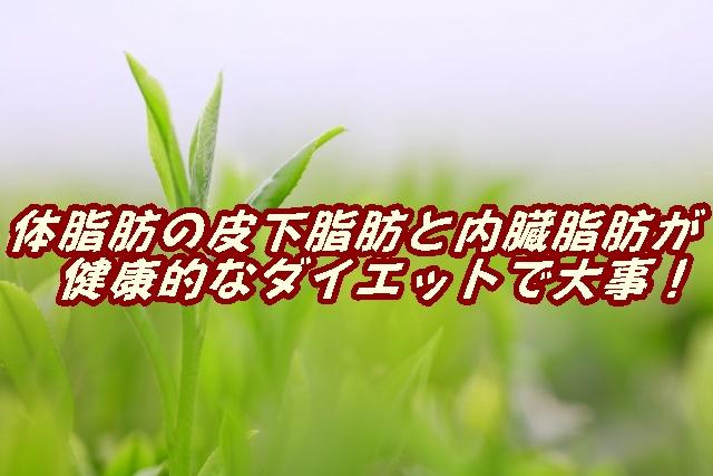 f:id:micchiiiiiii_pt:20210228085819j:plain
