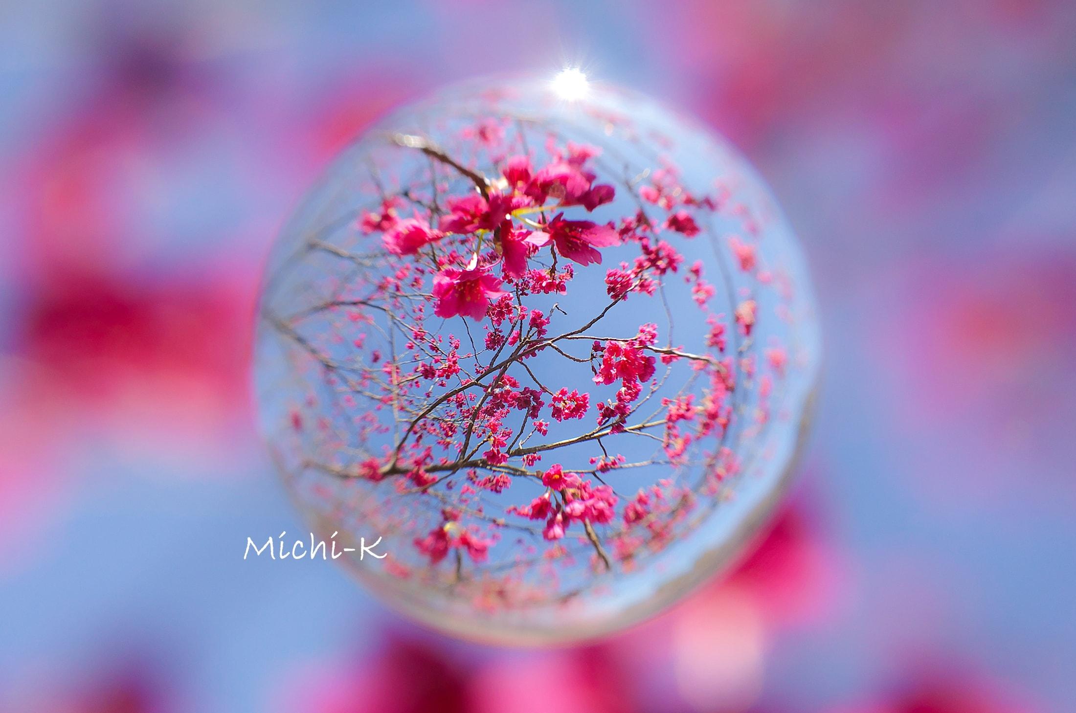 寒緋桜-宙玉-1