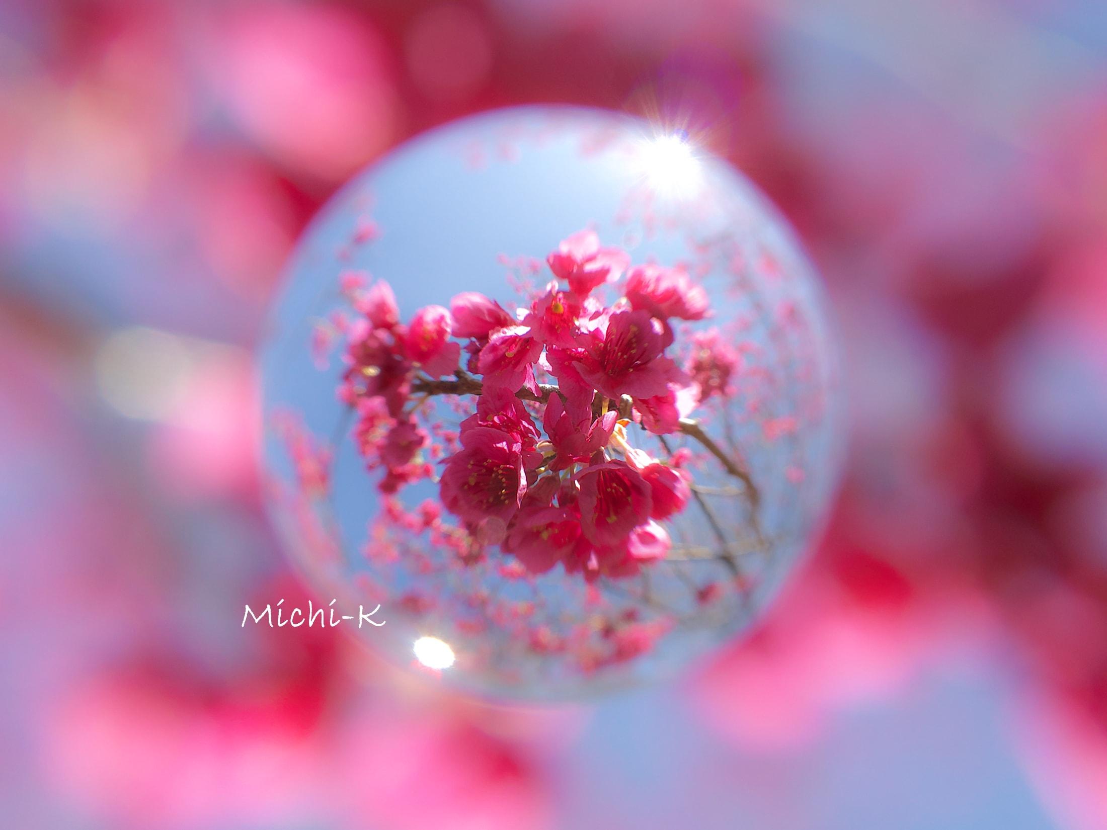 寒緋桜-宙玉-2