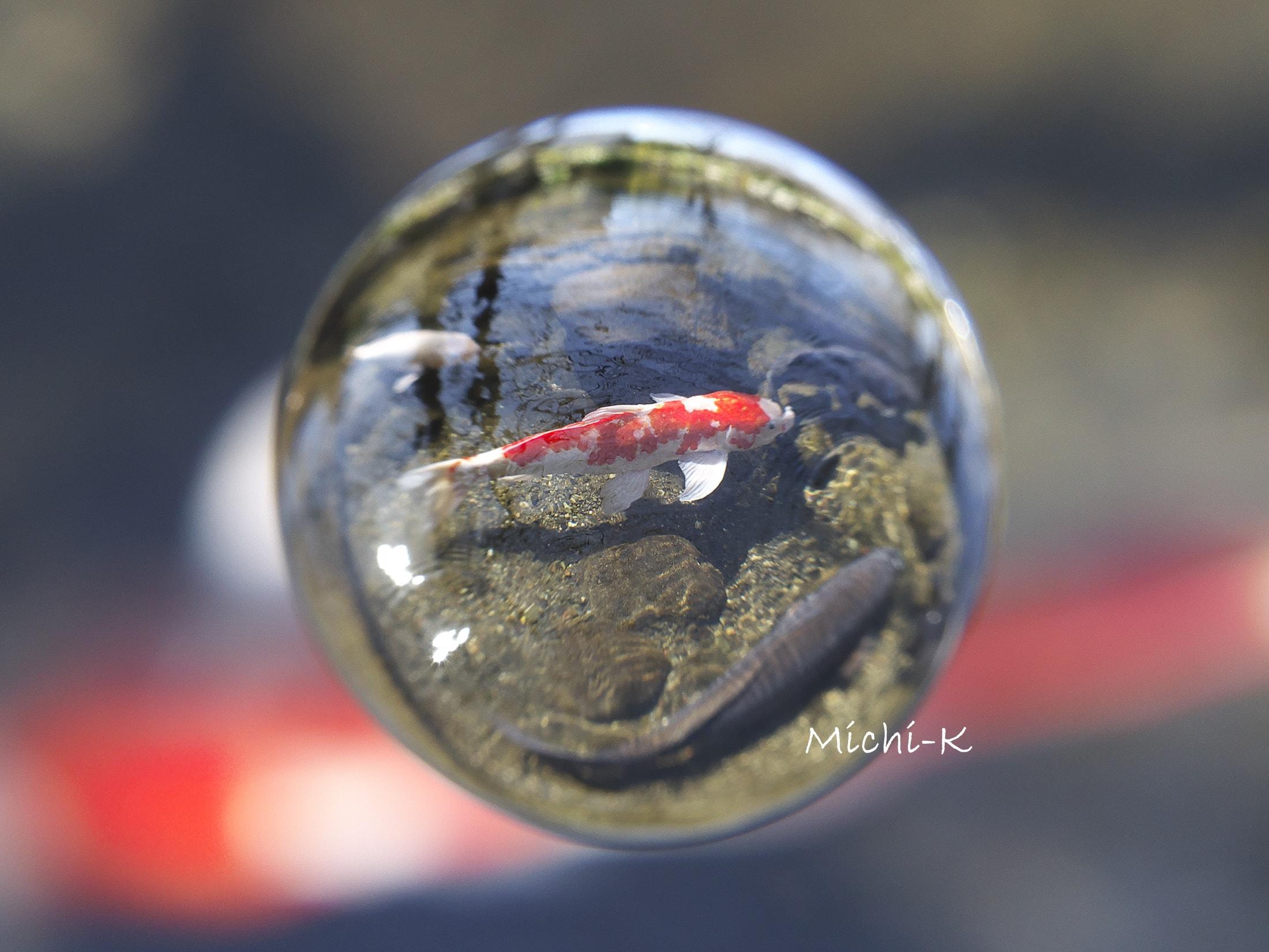 鯉-宙玉-2