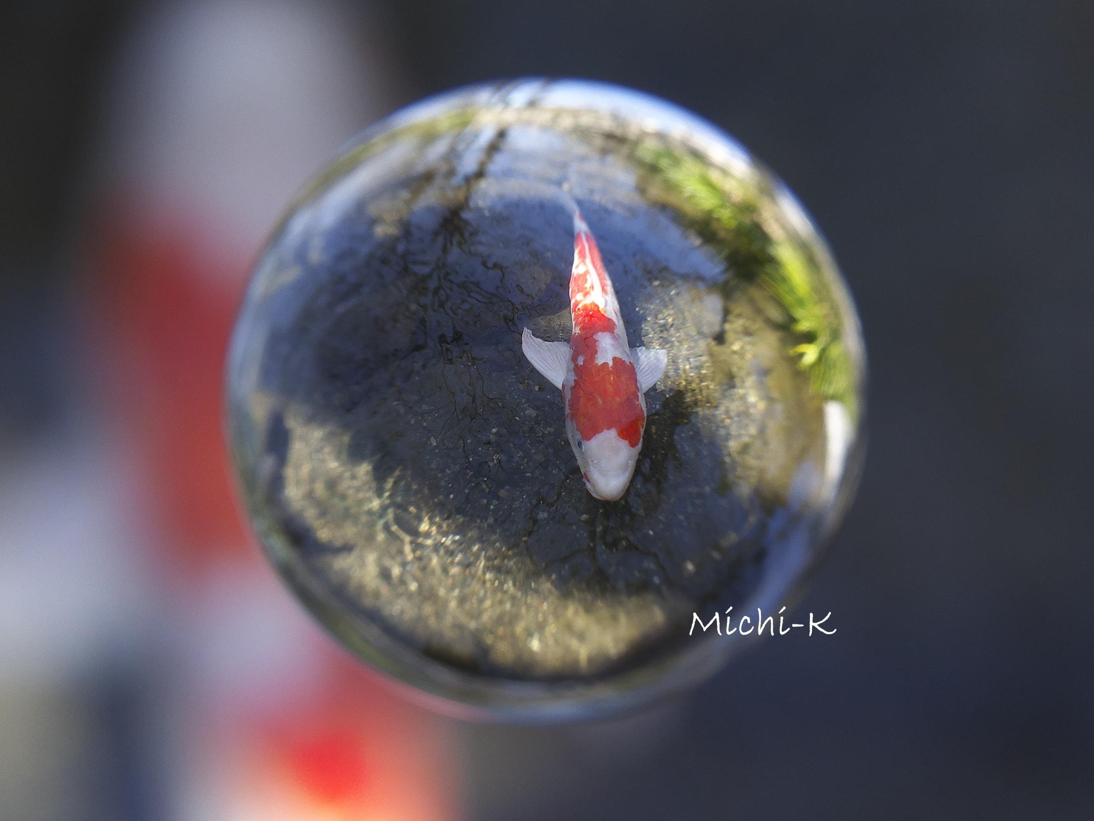 鯉-宙玉-4