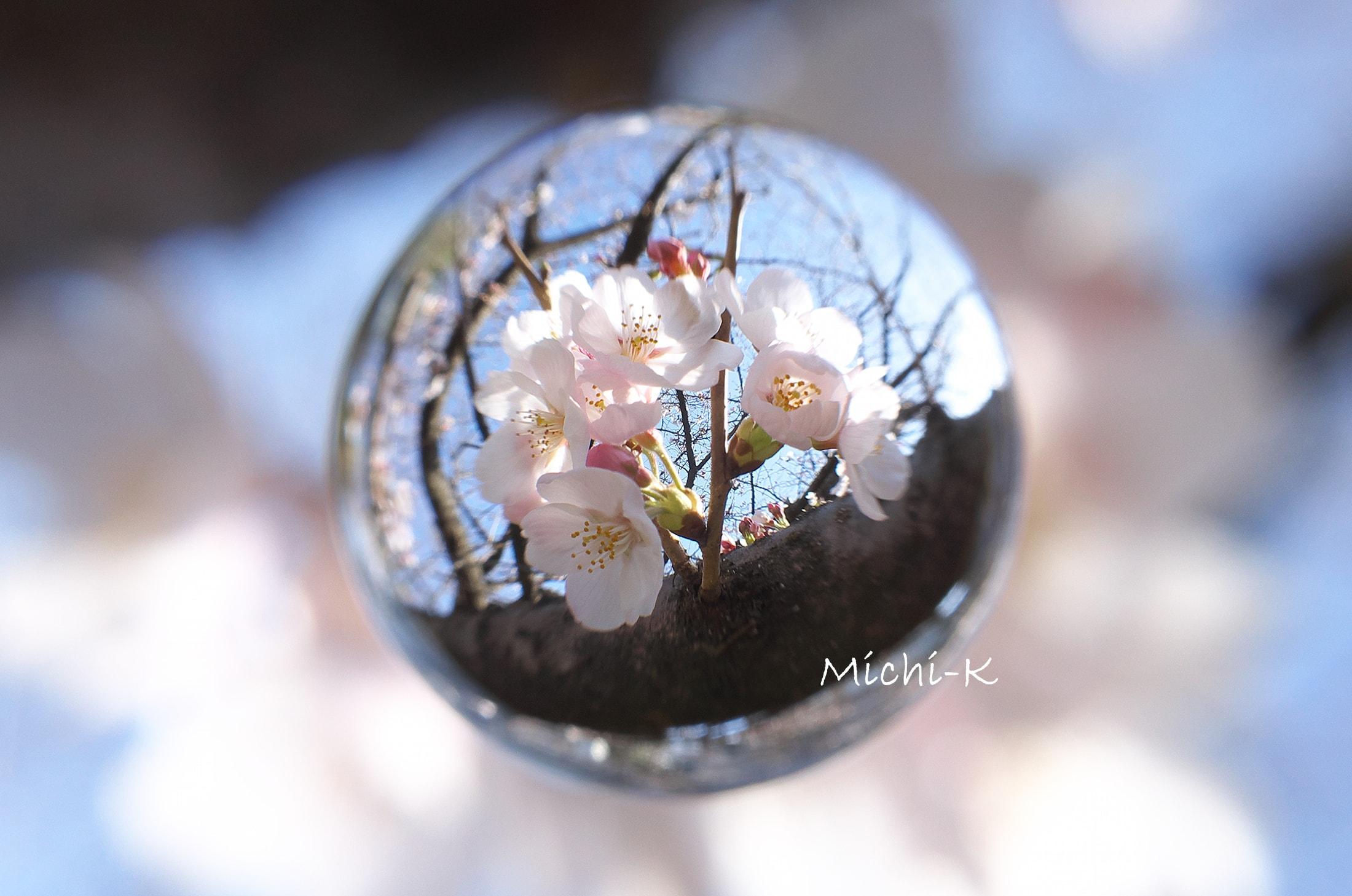 ソメイヨシノ咲き始め-宙玉1