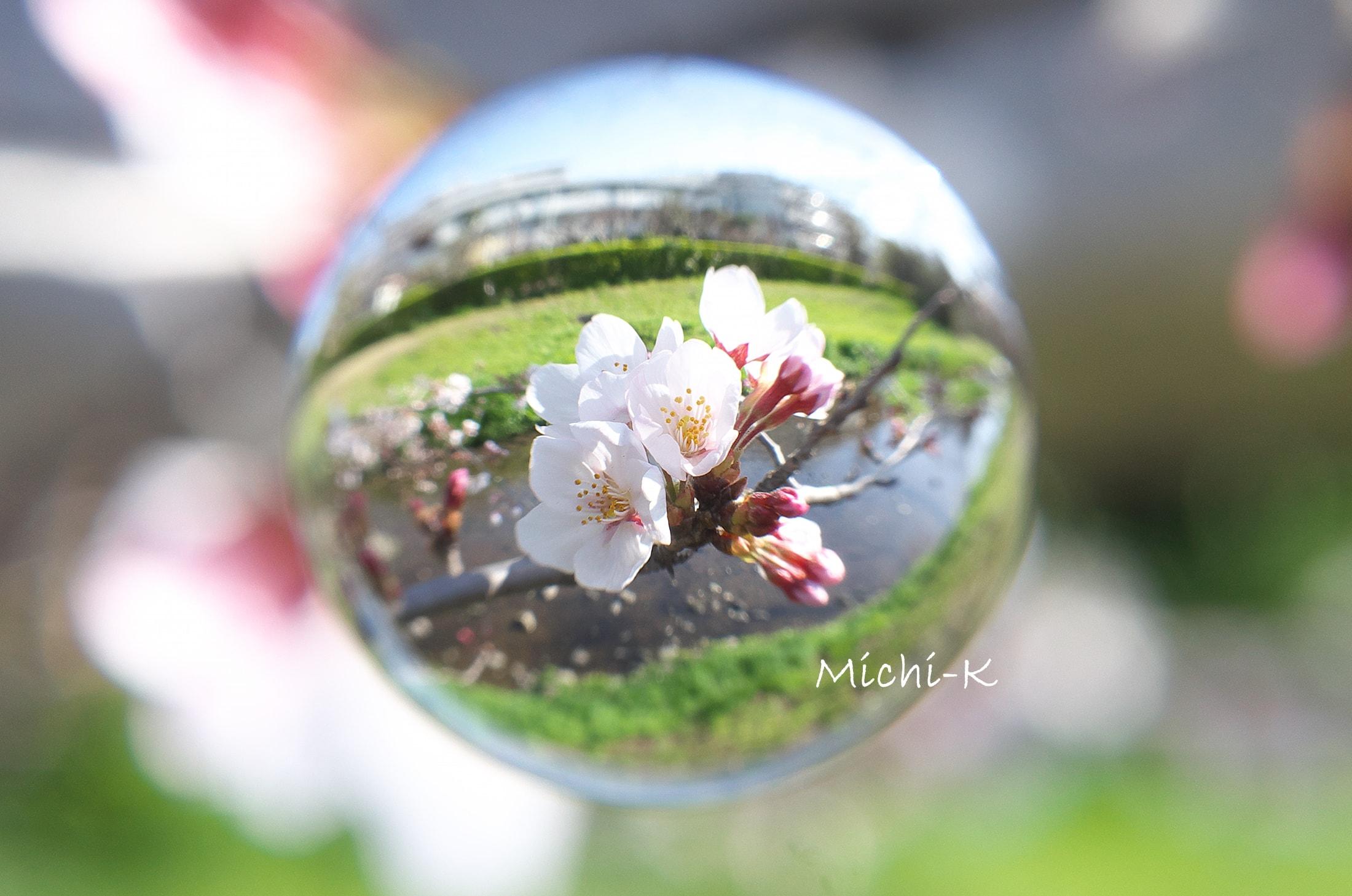 ソメイヨシノ咲き始め-宙玉2