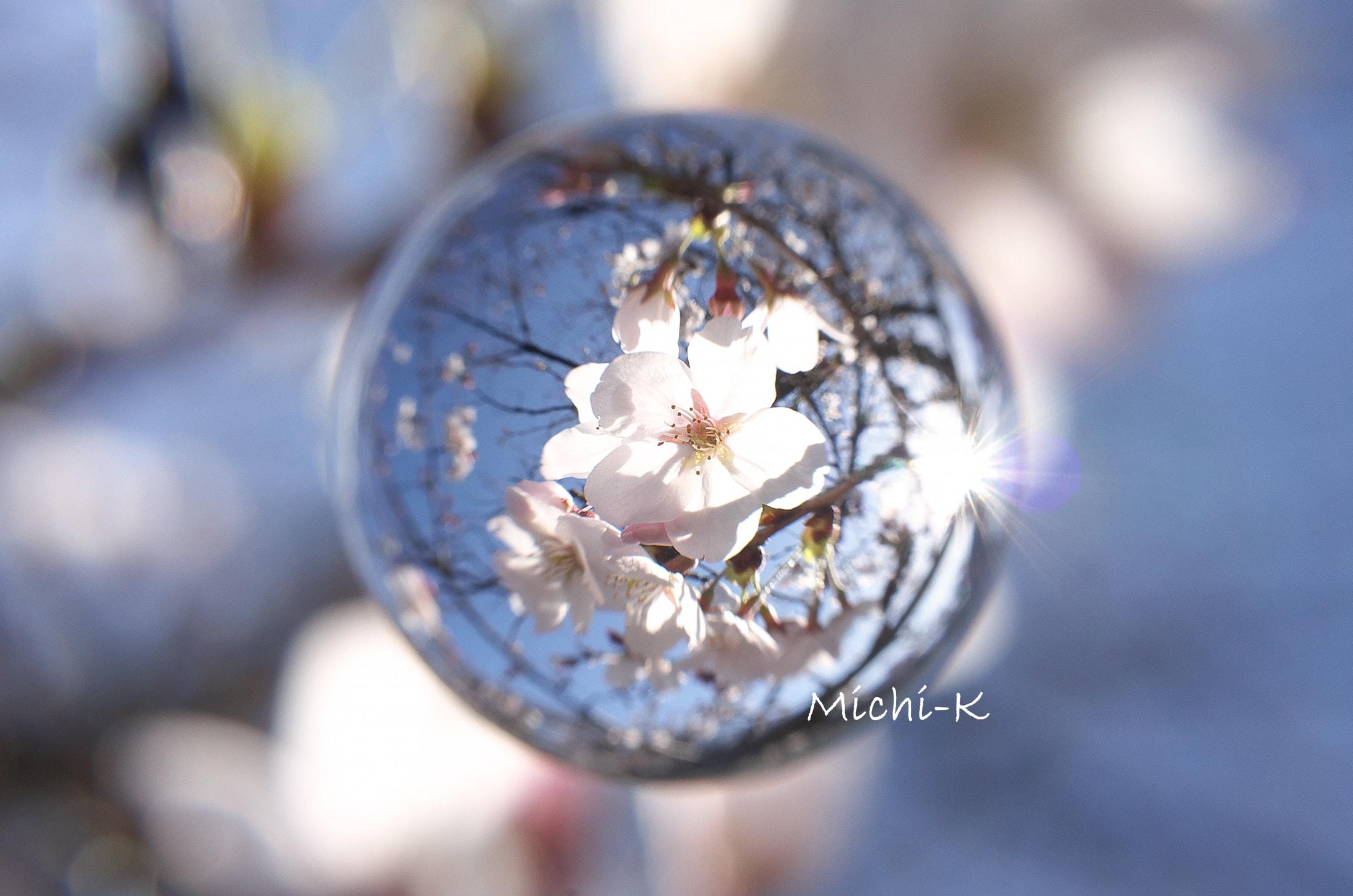 ソメイヨシノ咲き始め-宙玉5