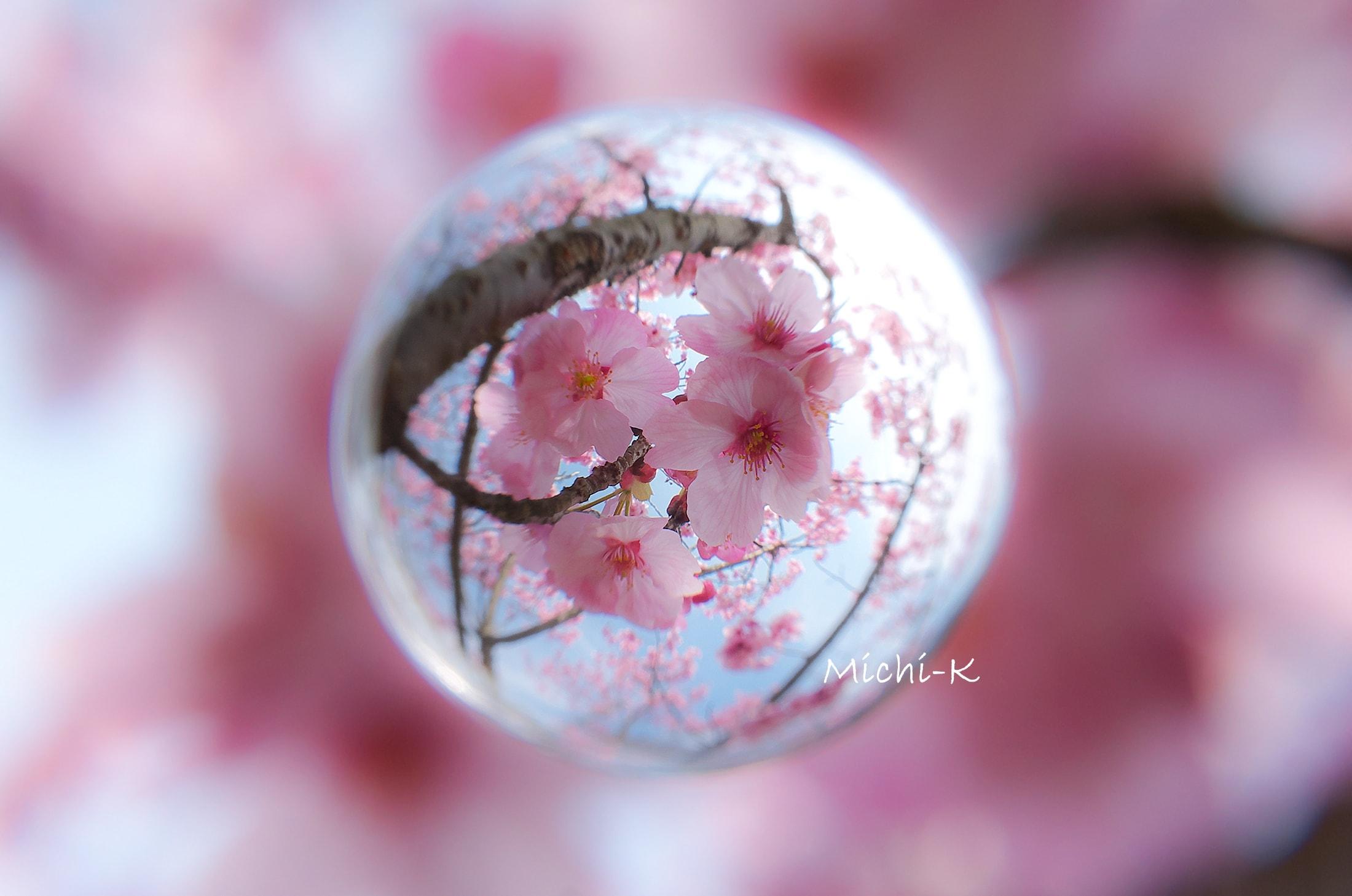 桜 (陽光) -そらたま-4