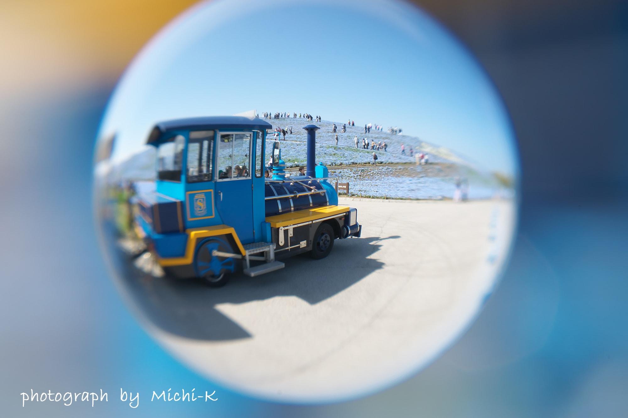 ひたち海浜公園のネモフィラ-宙玉1