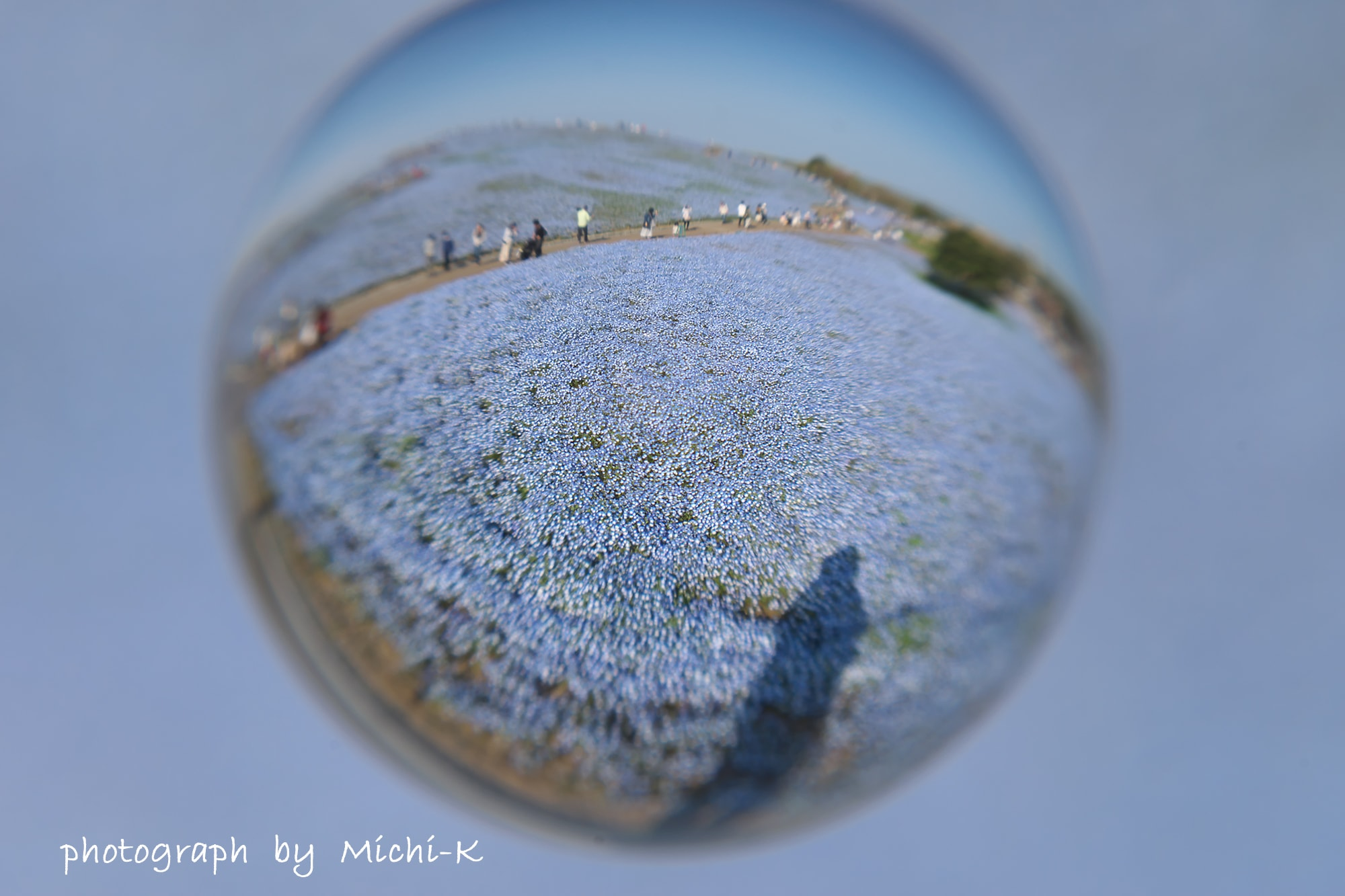 ひたち海浜公園のネモフィラ-宙玉7
