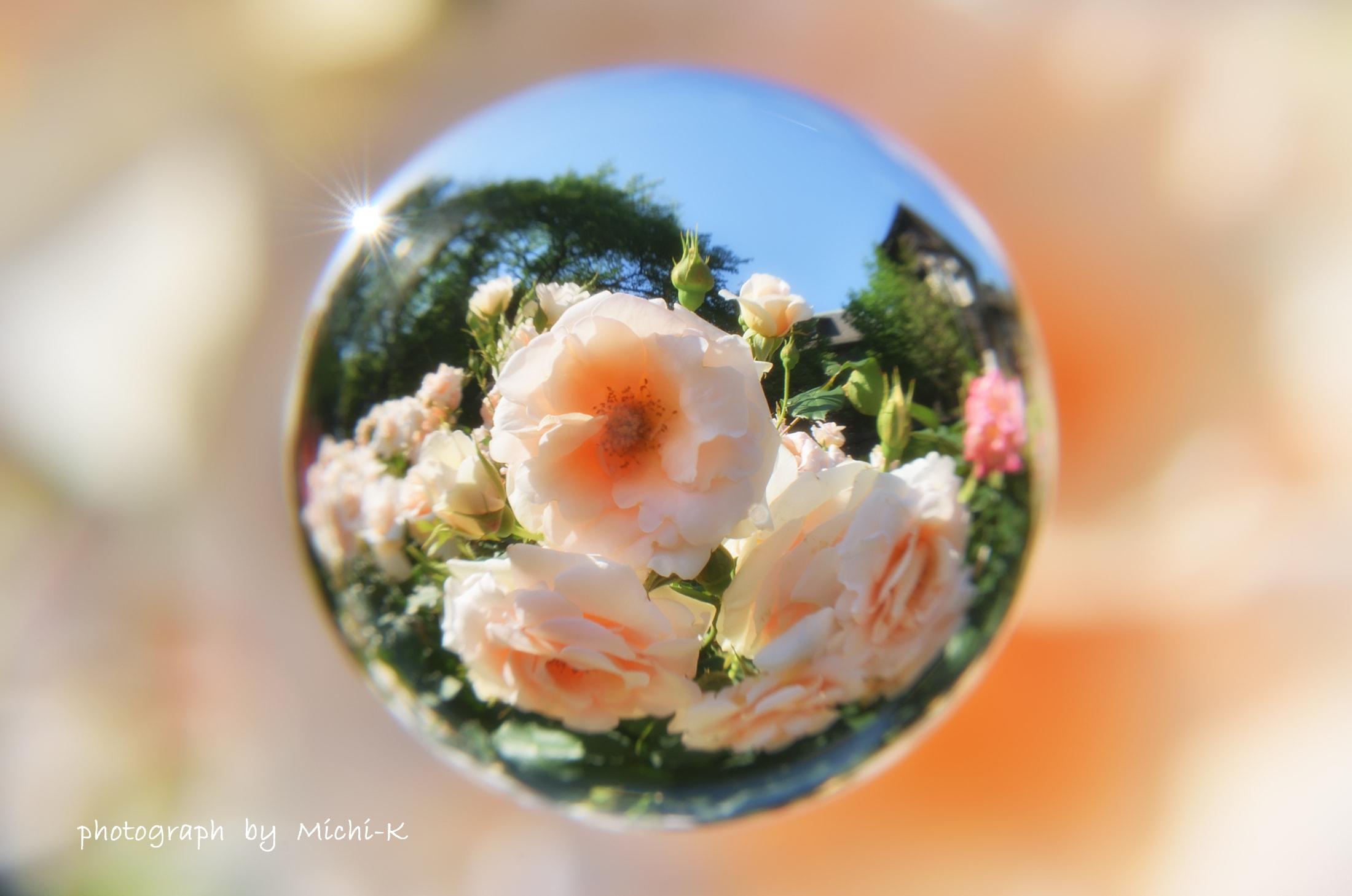 旧古河庭園バラ-宙玉2