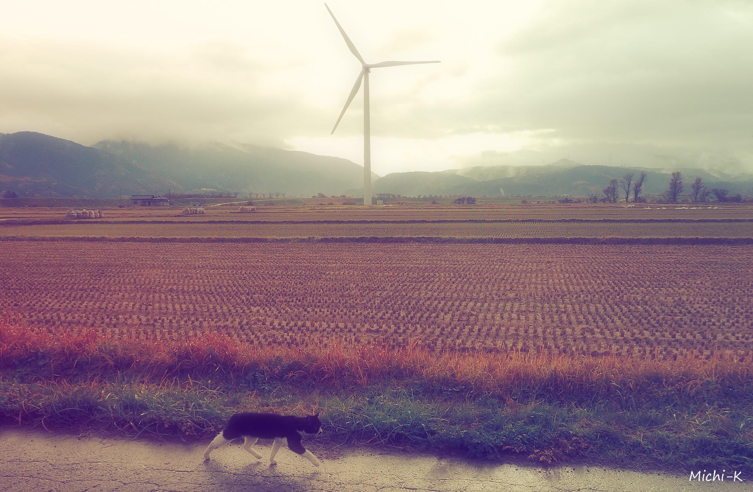 風車1-庄内町