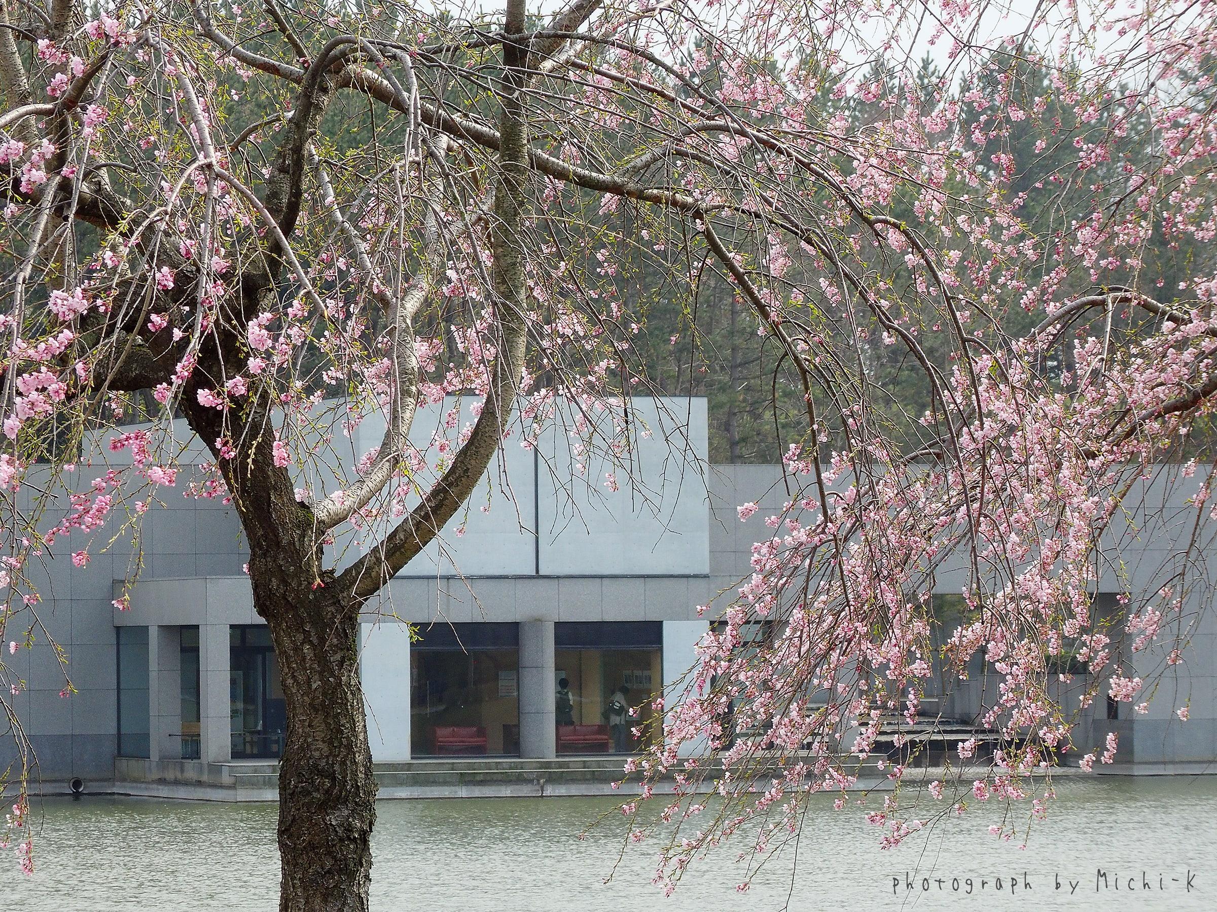 酒田市・飯盛山公園(土門拳記念館の外にて)2017/4/16 NO.2