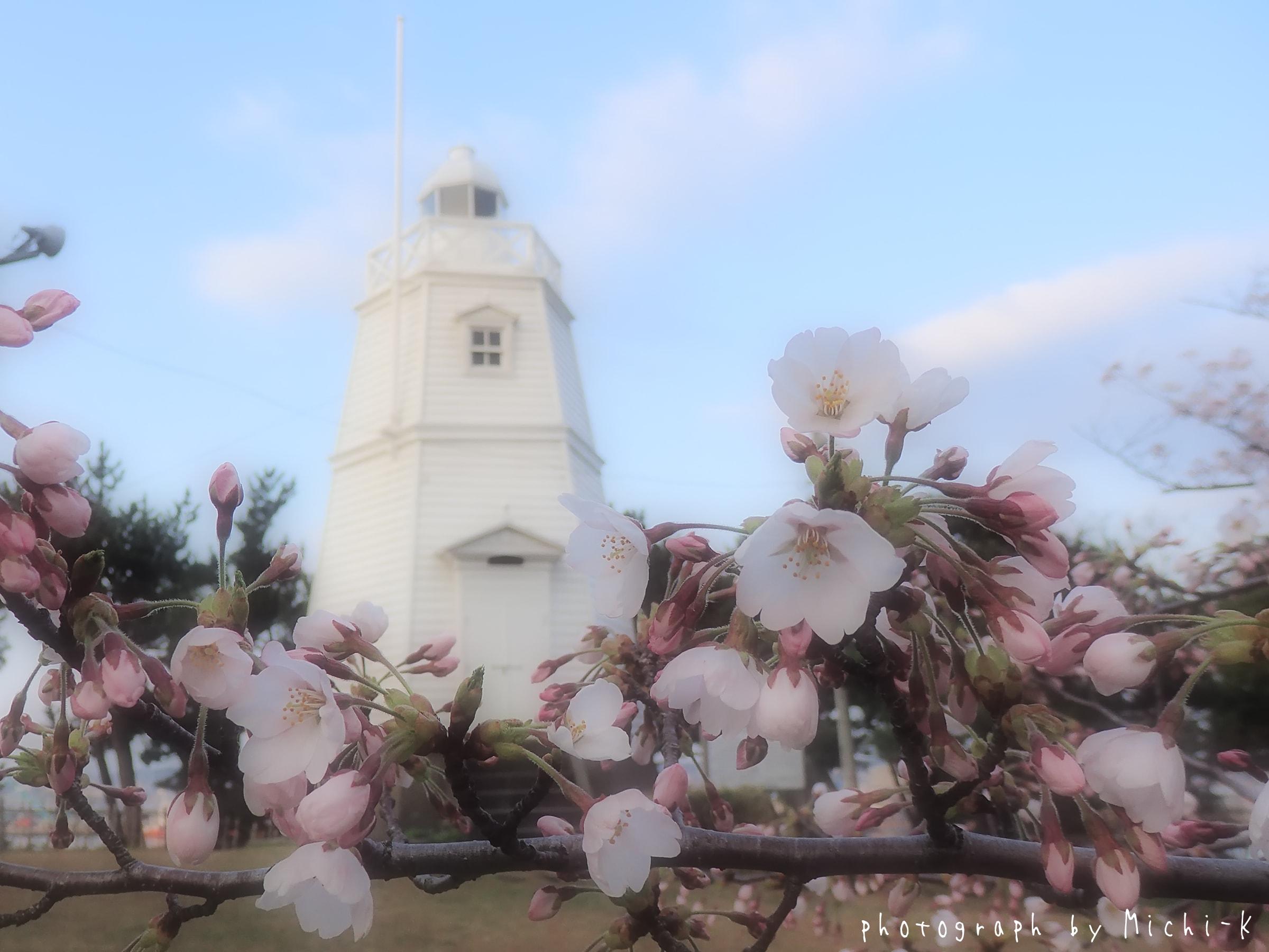 酒田市日和山公園、桜と灯台-2017/4/16 No.1