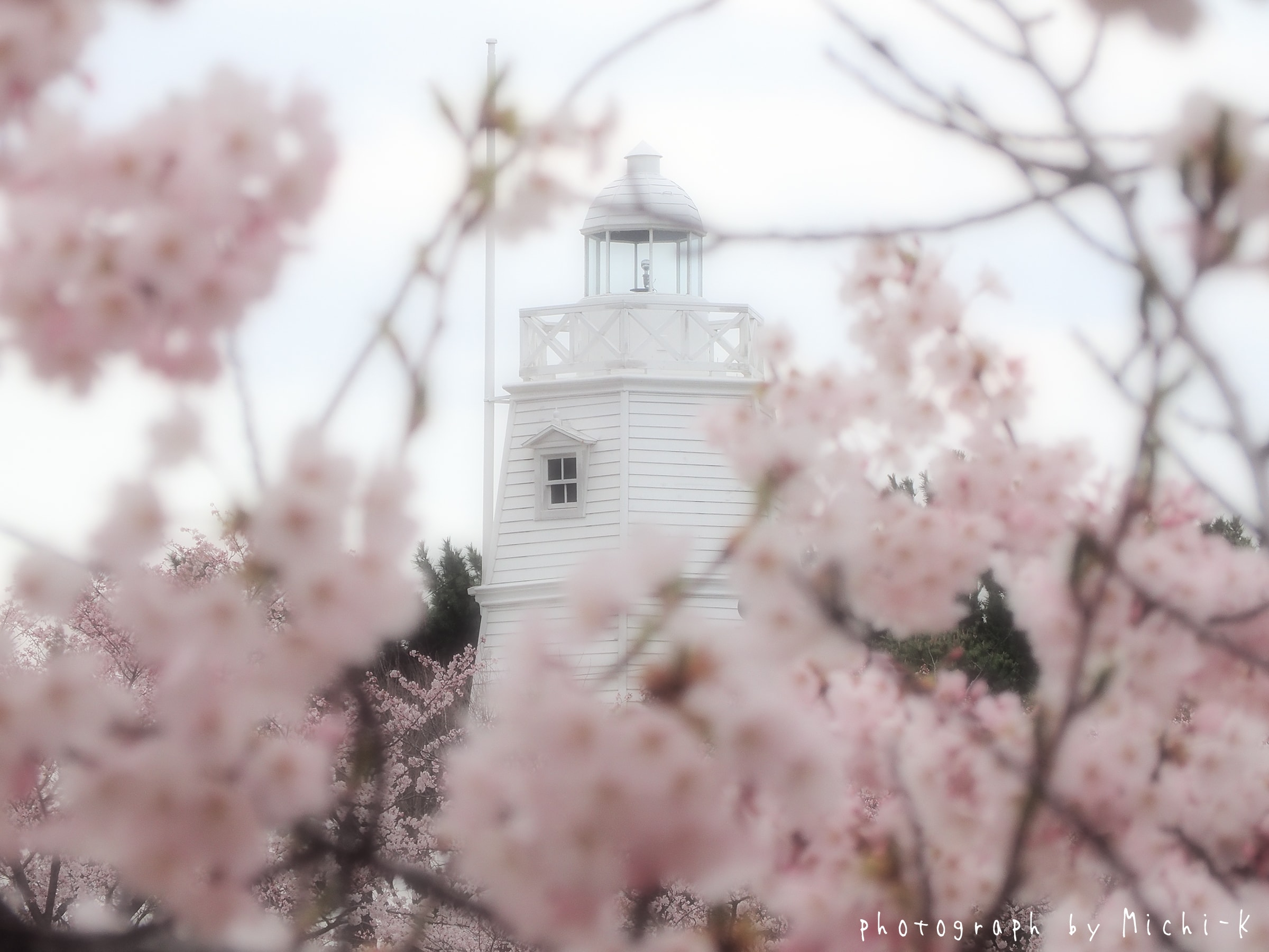 酒田市日和山公園、桜と灯台-2017/4/16 No.6