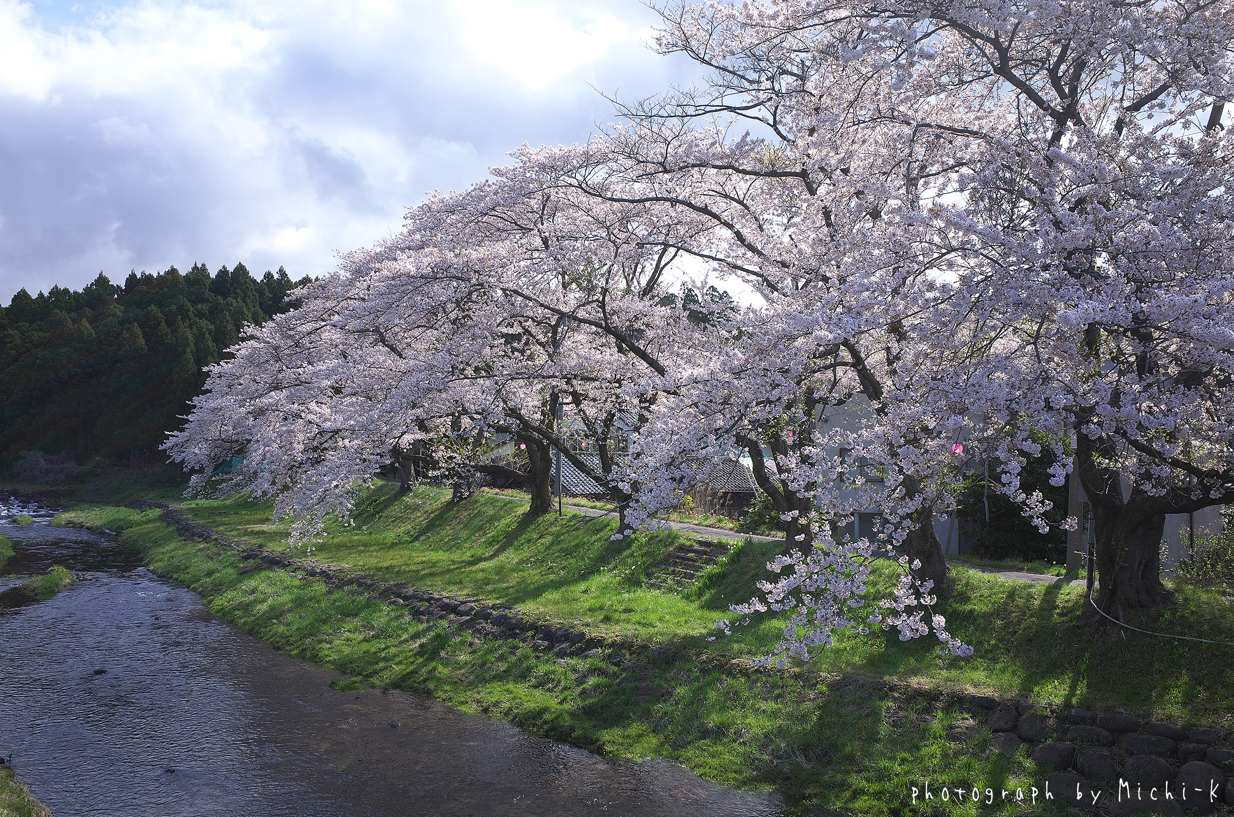 2017山形県遊佐町、中山河川公園の桜No.2