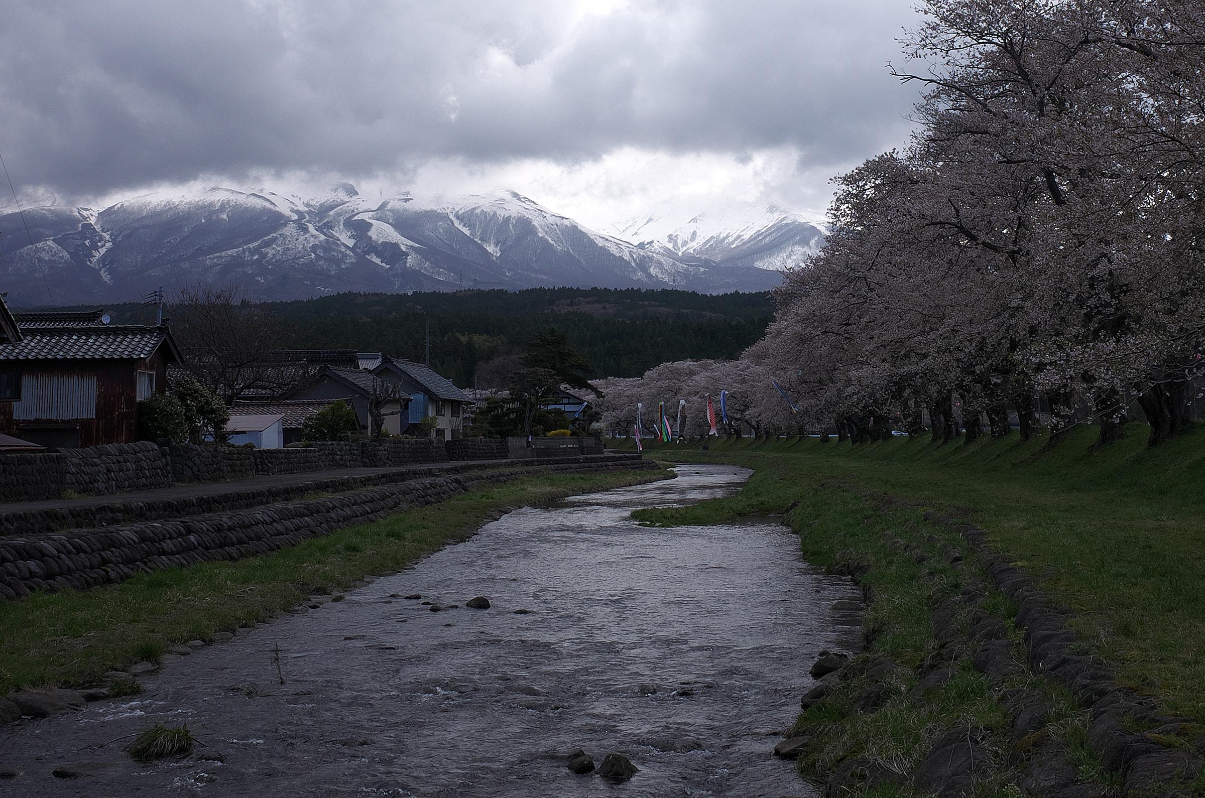 2017山形県遊佐町、中山河川公園の桜No.5