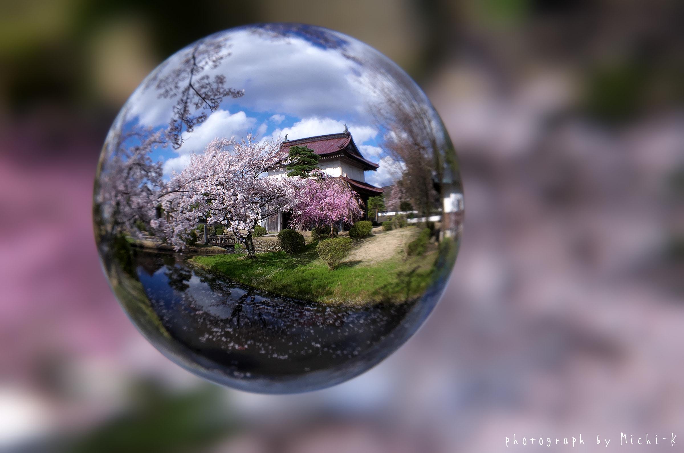 山形県酒田市・松山歴史公園の桜(宙玉)No.1