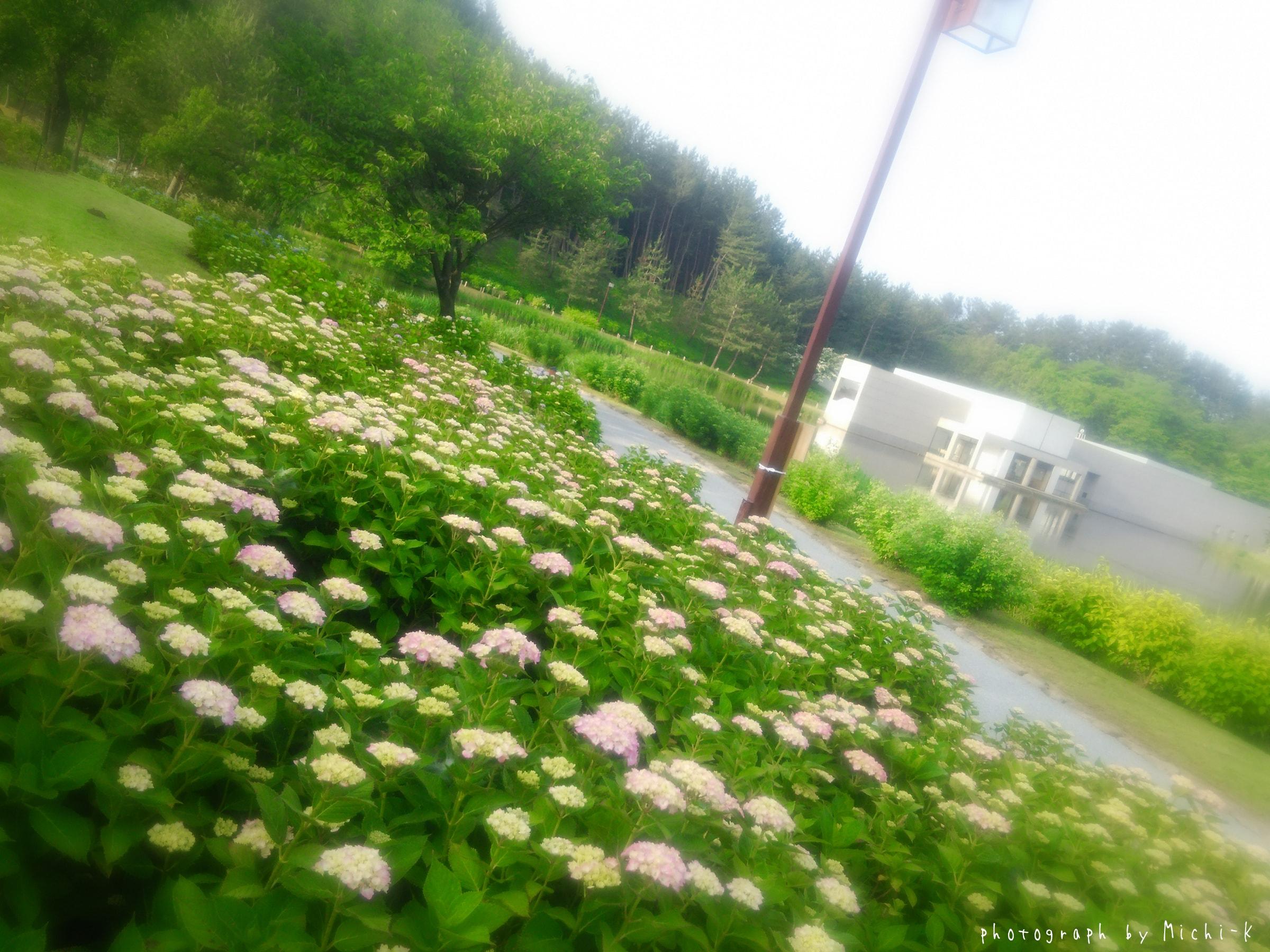 土門拳記念館、紫陽花1
