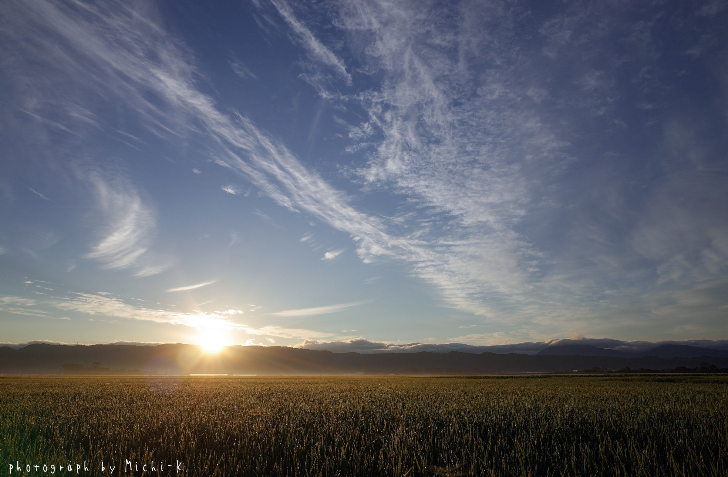 日の出~酒田市の水田2