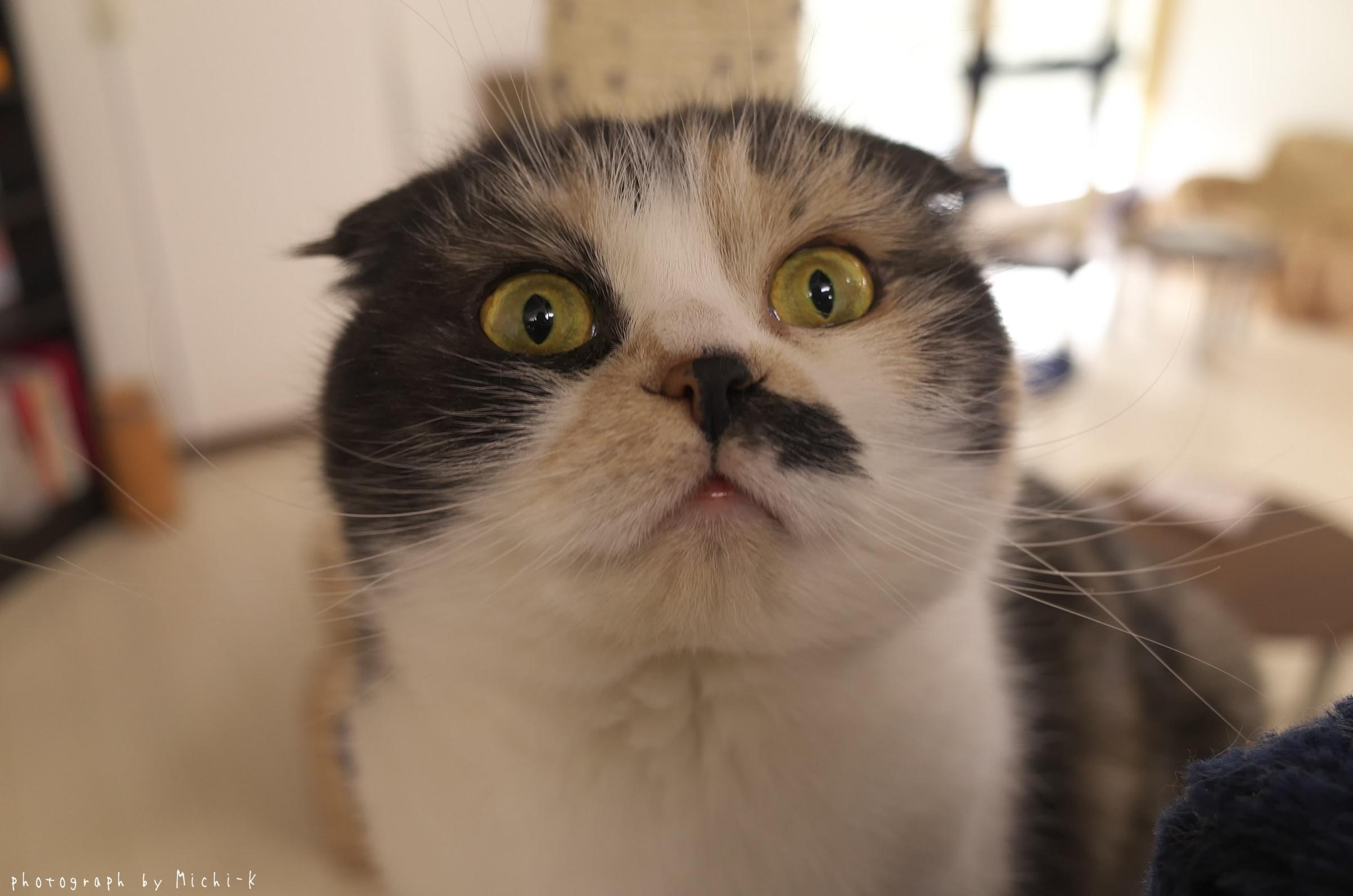 「猫部屋しっぽ」の猫1