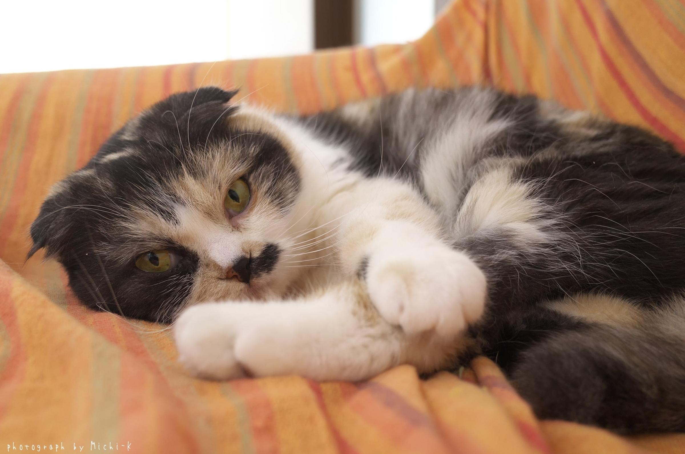 「猫部屋しっぽ」の猫2