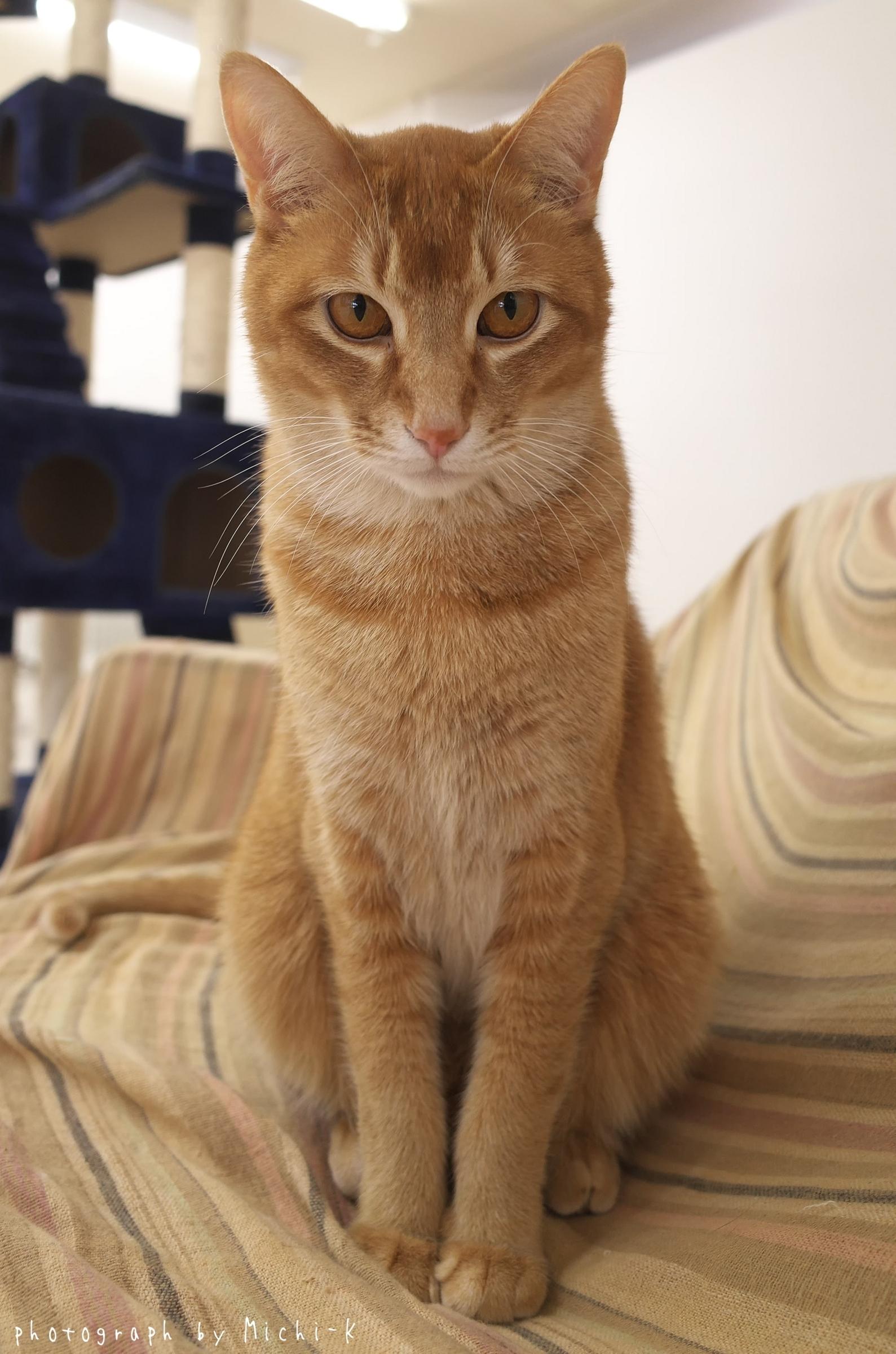 「猫部屋しっぽ」の猫5