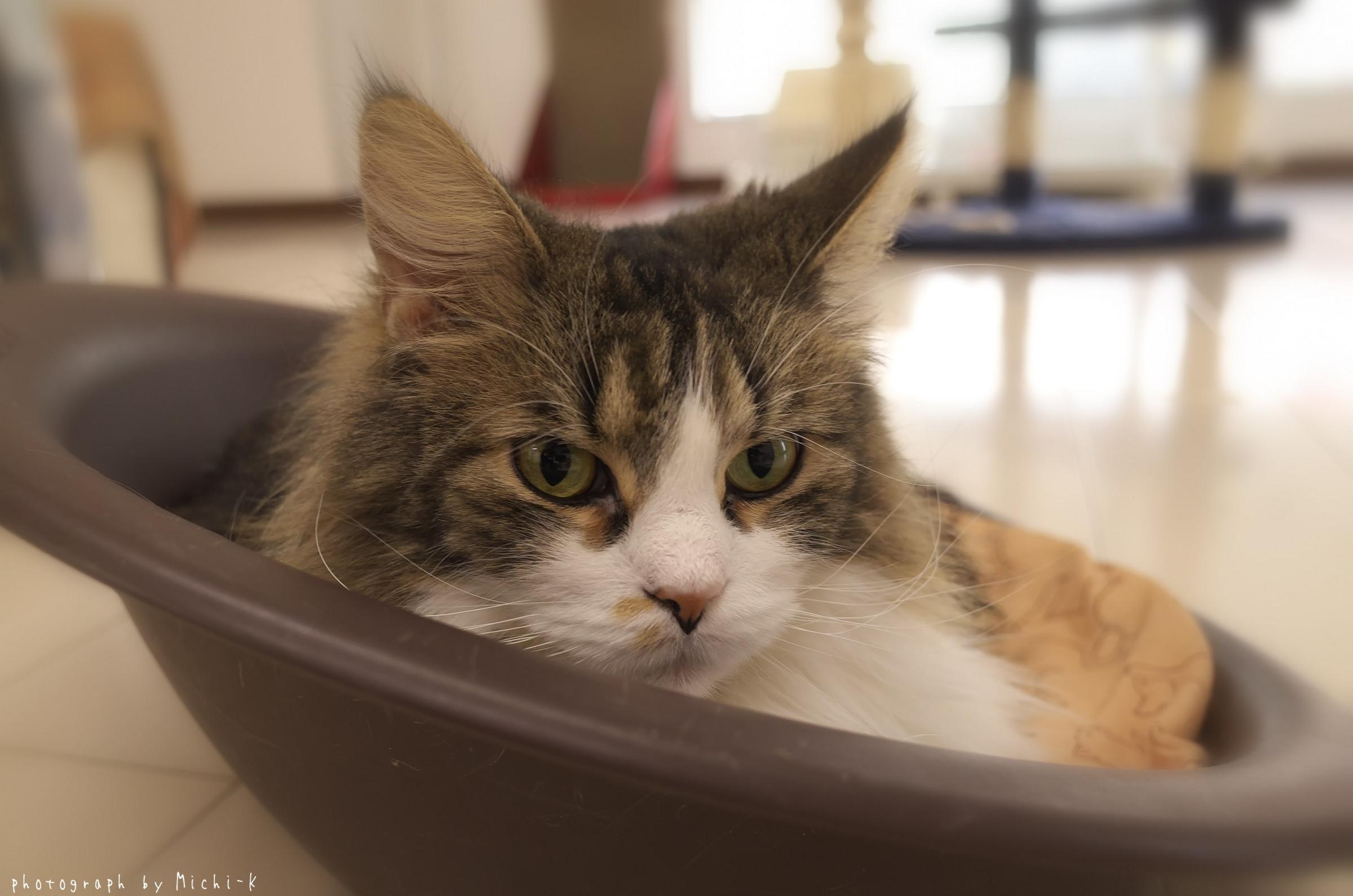 「猫部屋しっぽ」の猫6