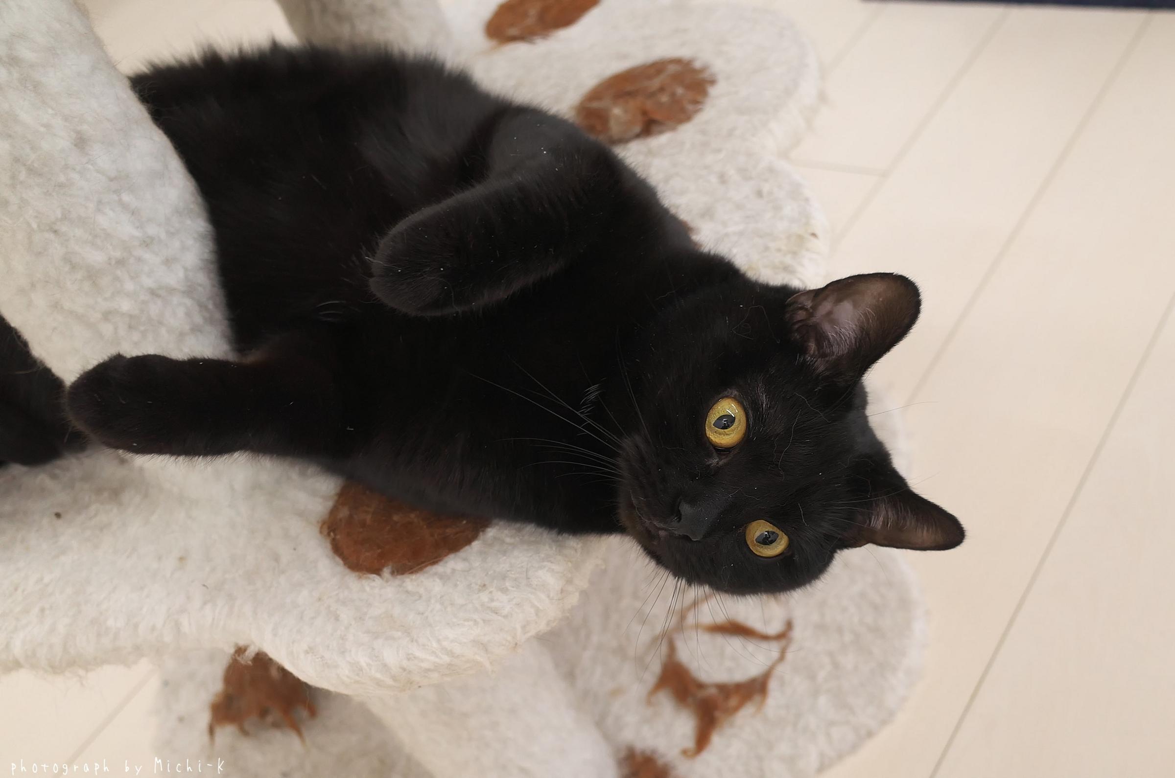 「猫部屋しっぽ」の猫7