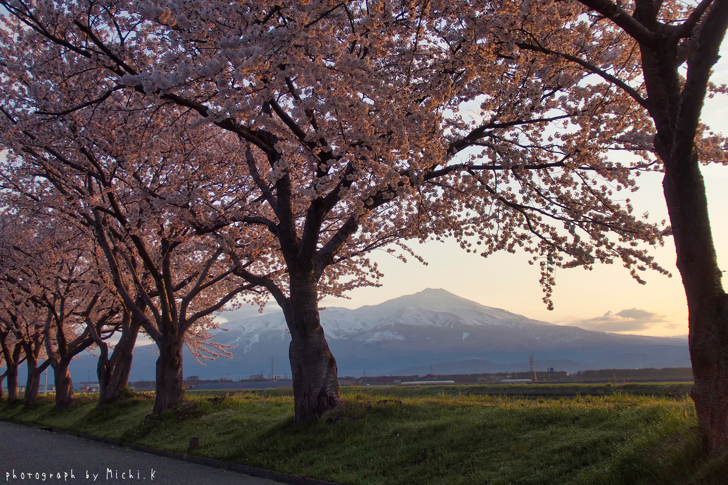 幸福川の桜2018-4-17(その2)