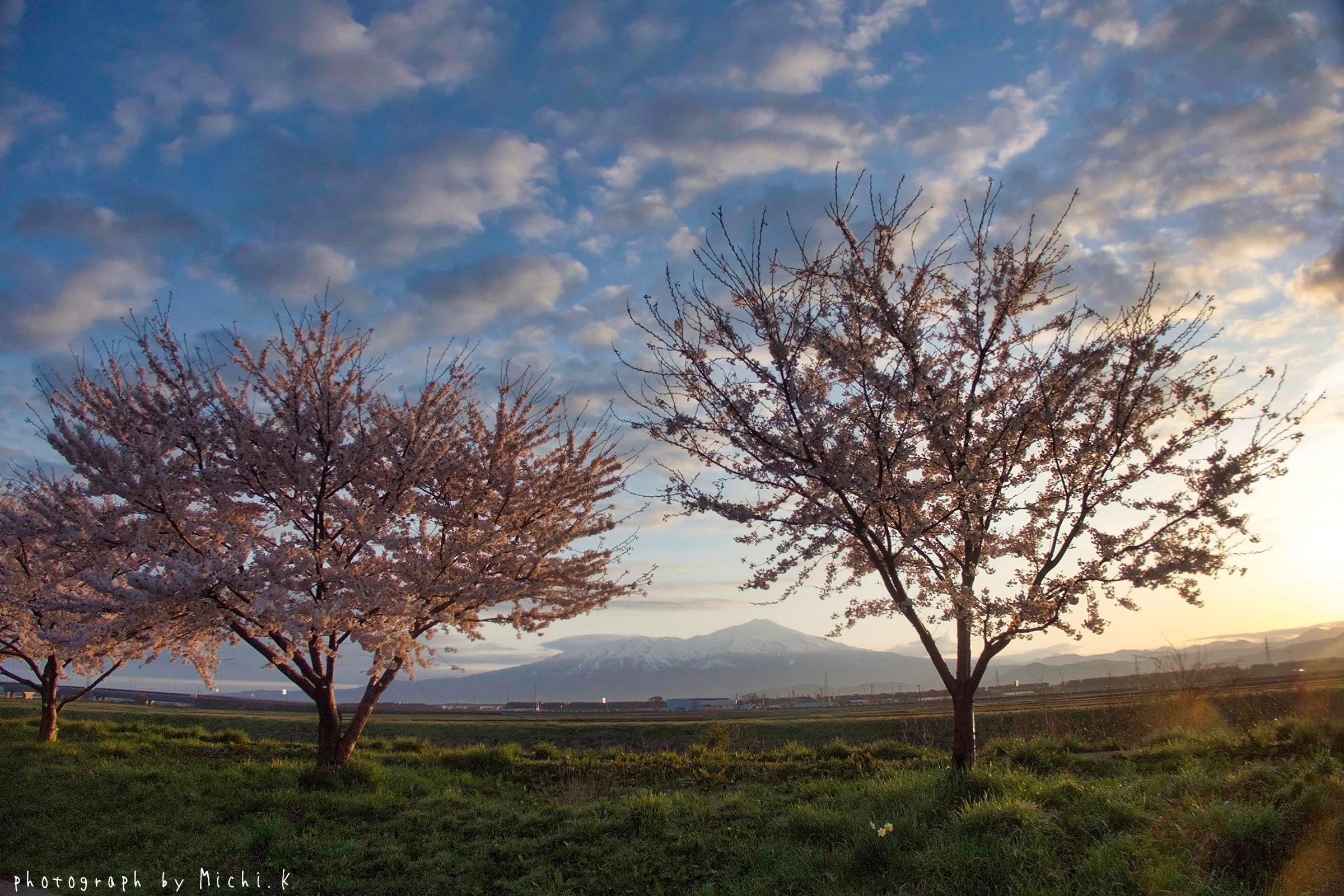 幸福川の桜2018-4-17(その7)