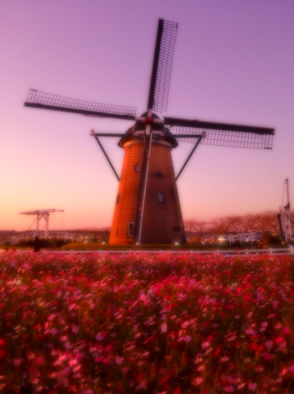 夕方の風車