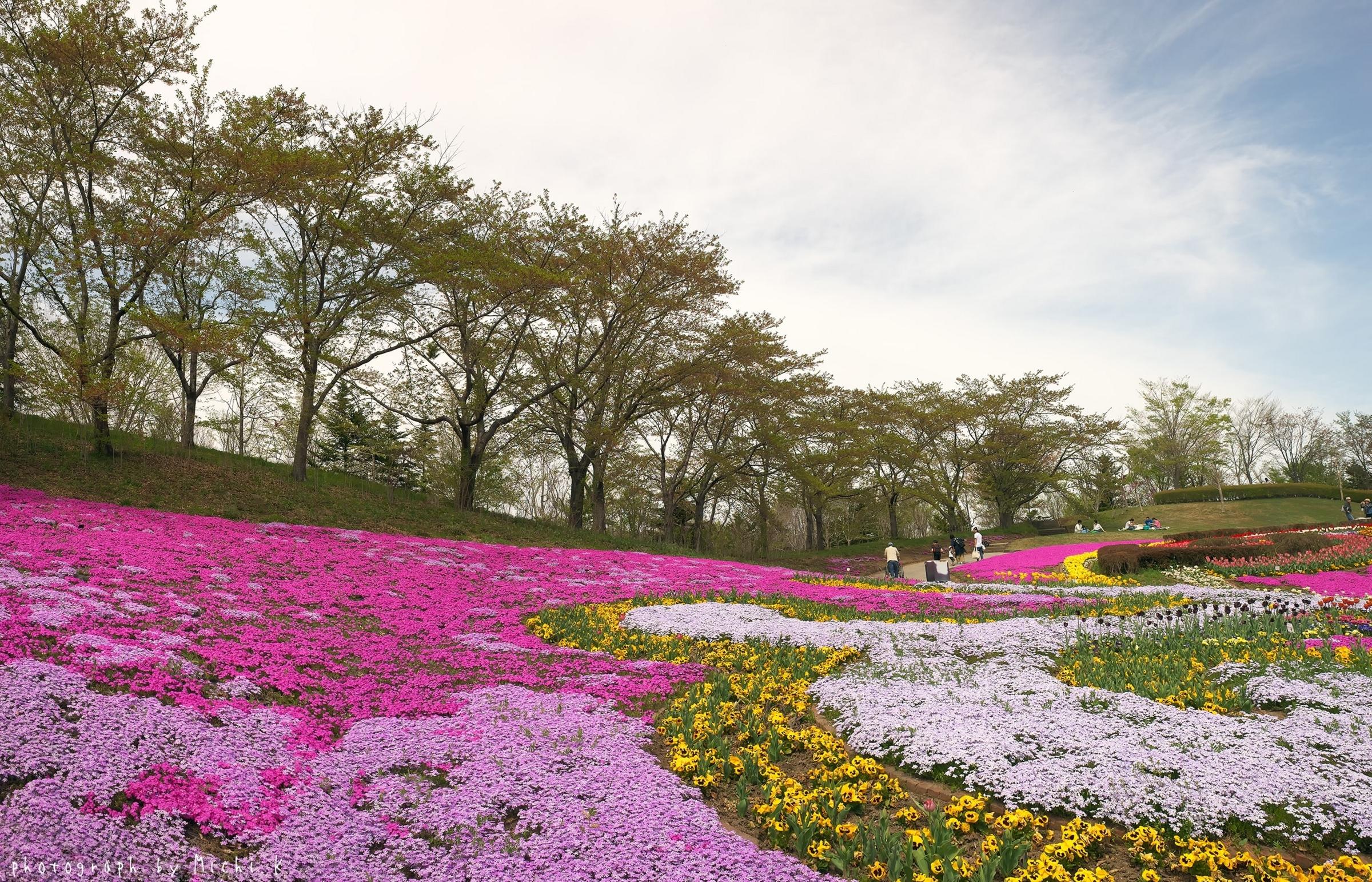 みちのく公園・シバザクラ 2018-4-22(その2)