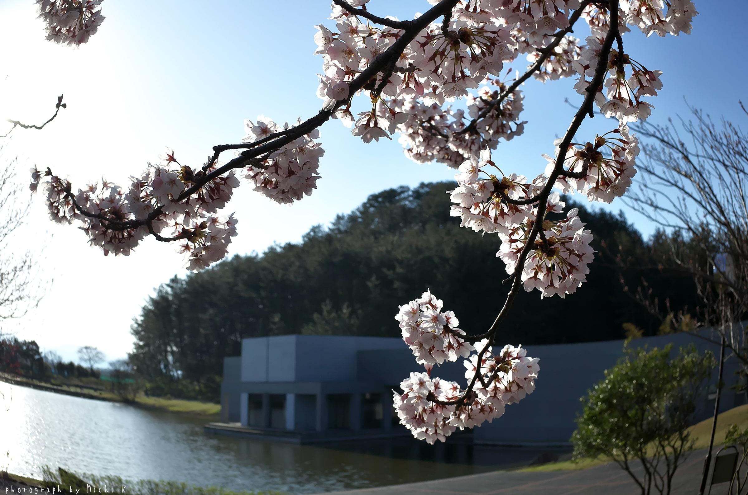 土門拳記念館2019-4-20 朝(写真その5)