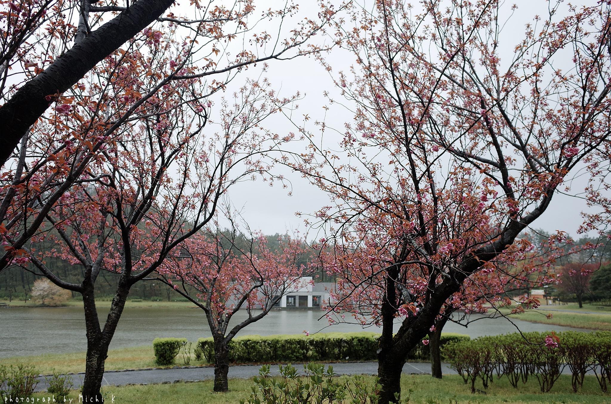 土門拳記念館2019-4-27朝(写真その4)