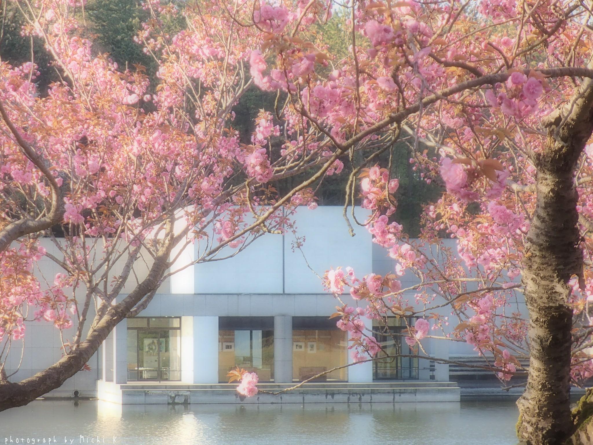 土門拳記念館にて2019年4月29日(写真その5)