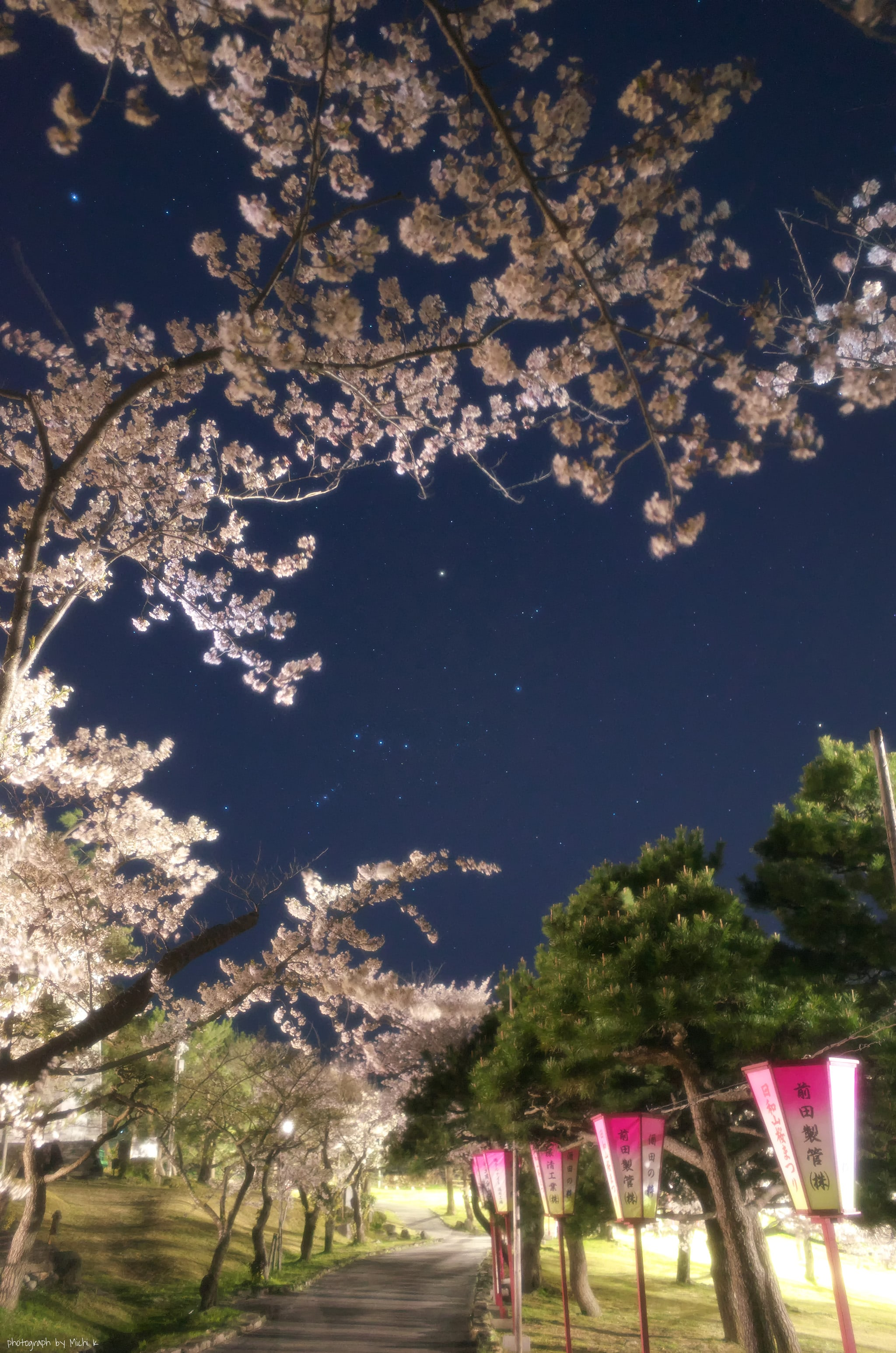 酒田市、夜桜の日和山公園2020-4-16(写真その1)