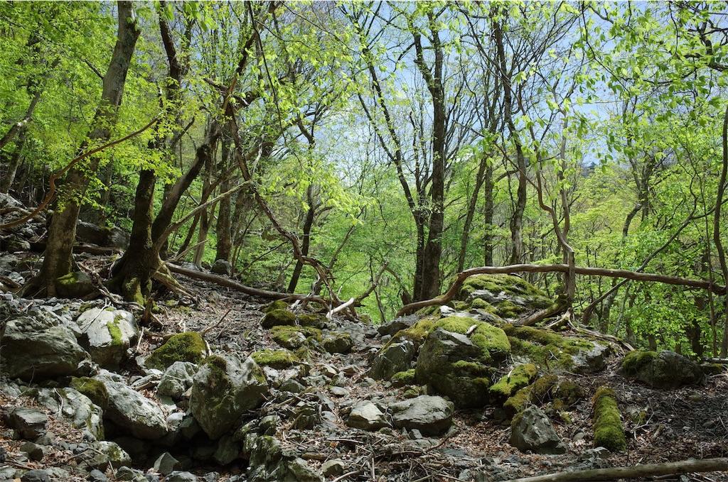 f:id:michi-trail:20190519201410j:image