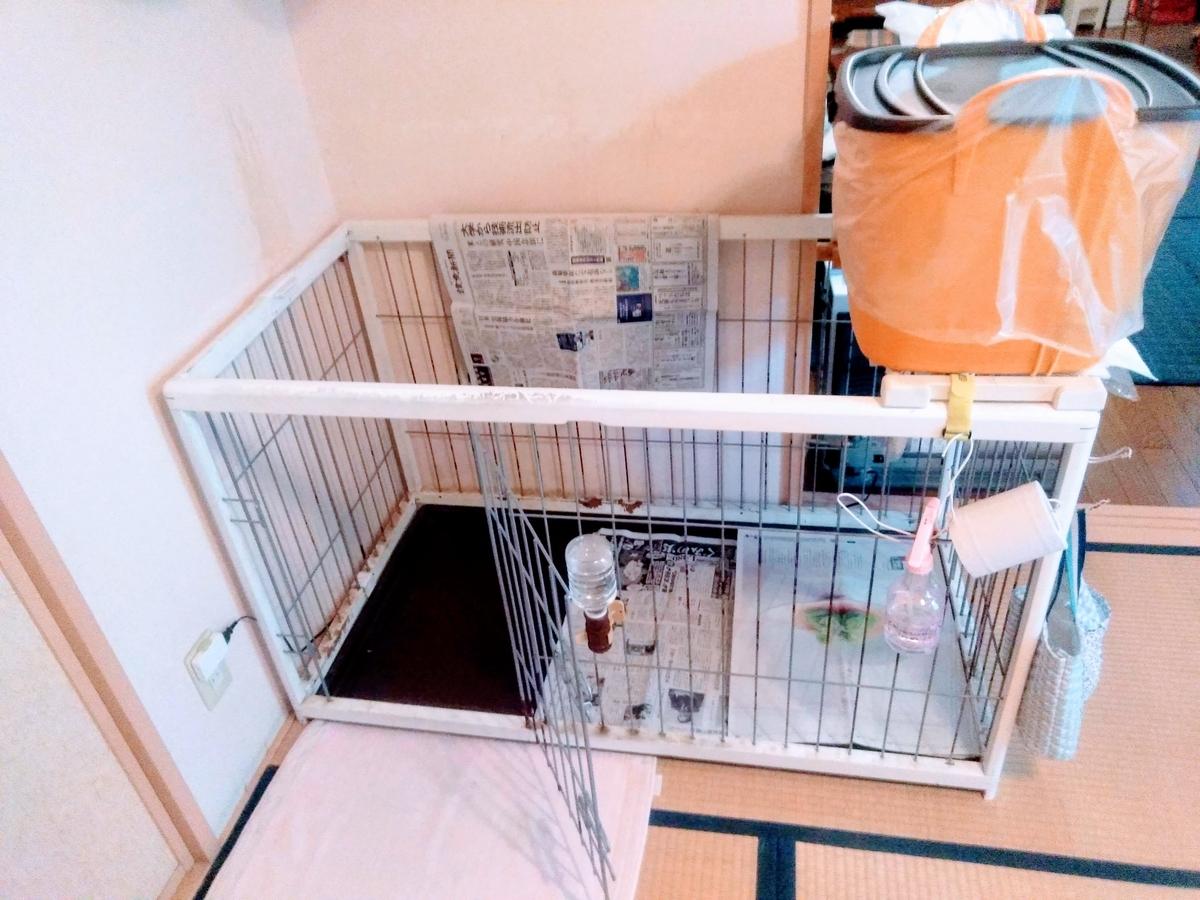 犬用トイレにペットシーツと新聞紙を設置